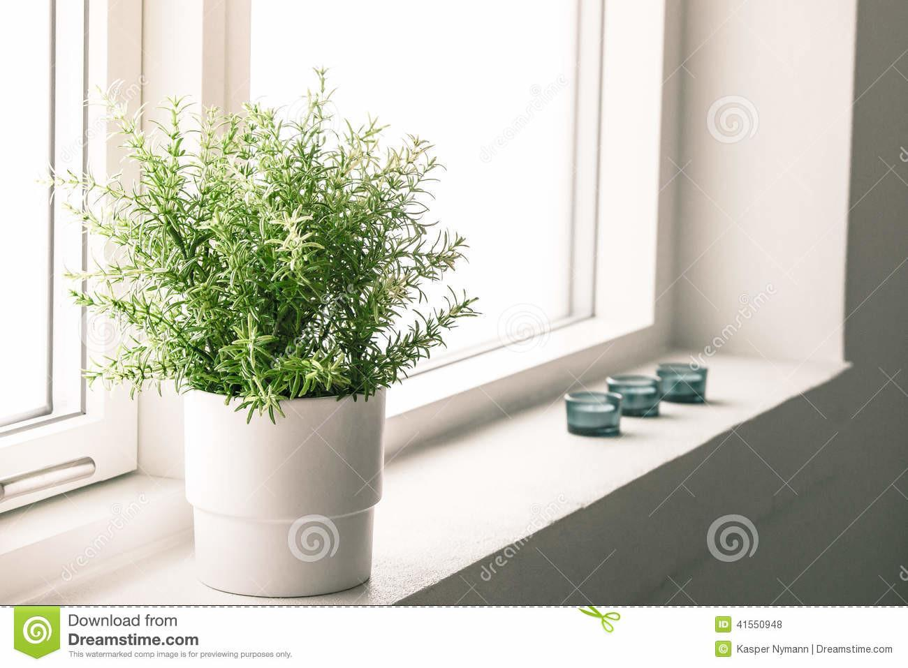 Indoor Plant Bathroom Window Stock