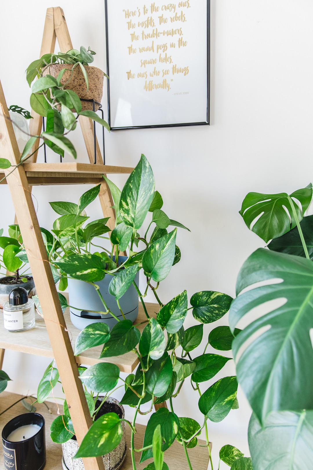 Indoor Plant Guide Beginner Plants Can Kill