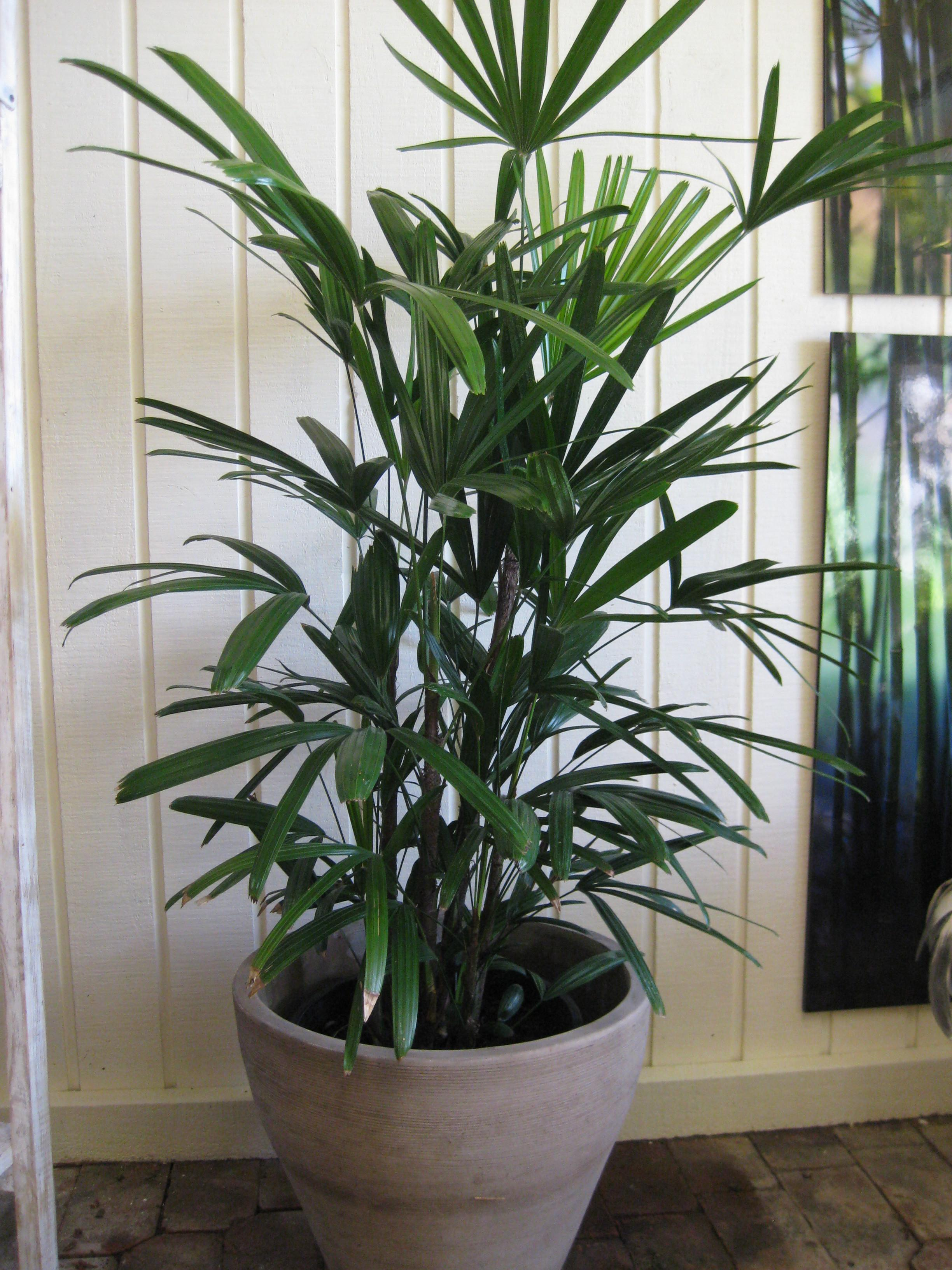 Indoor Plants Blooms Productivity Business Homes