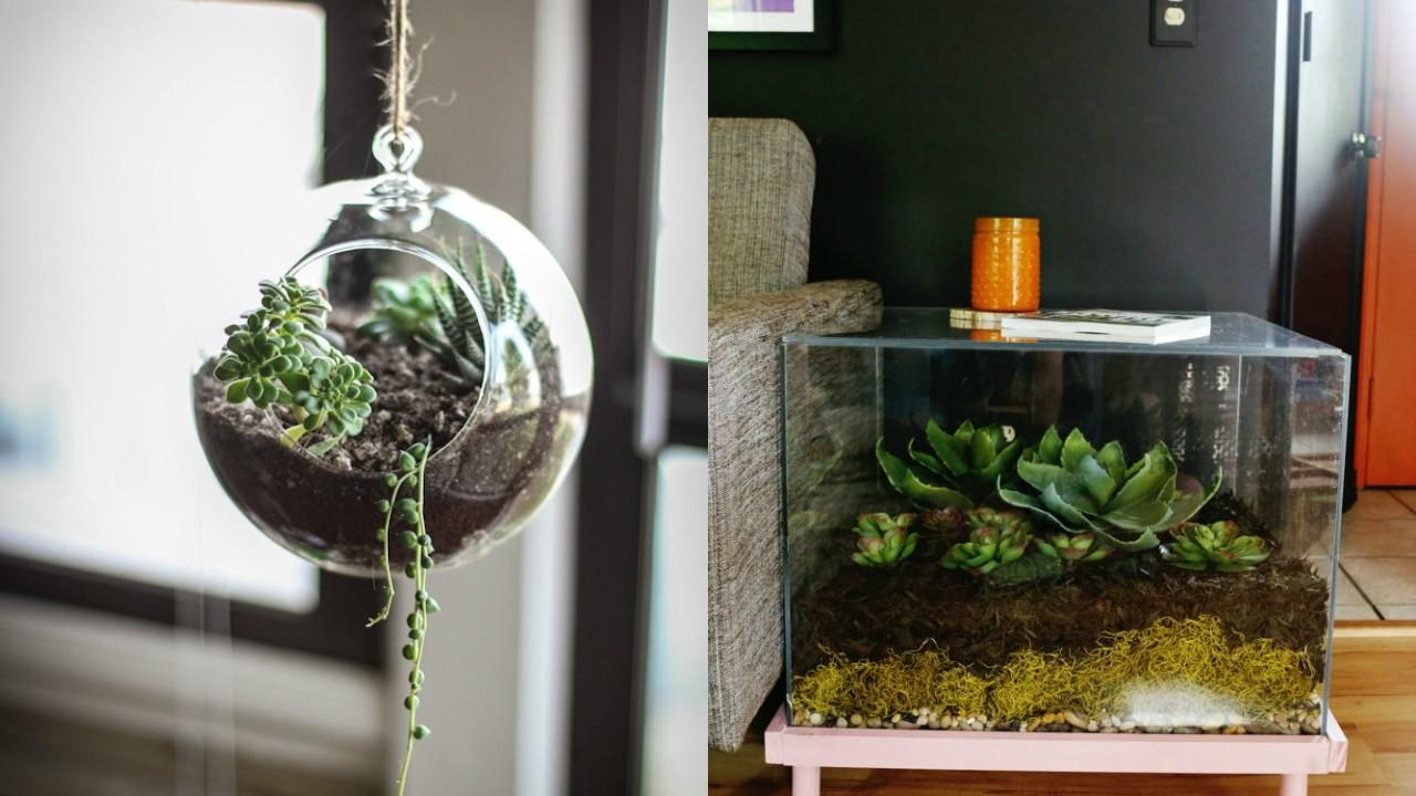 Inspiration Terrariums Accent Home Nature