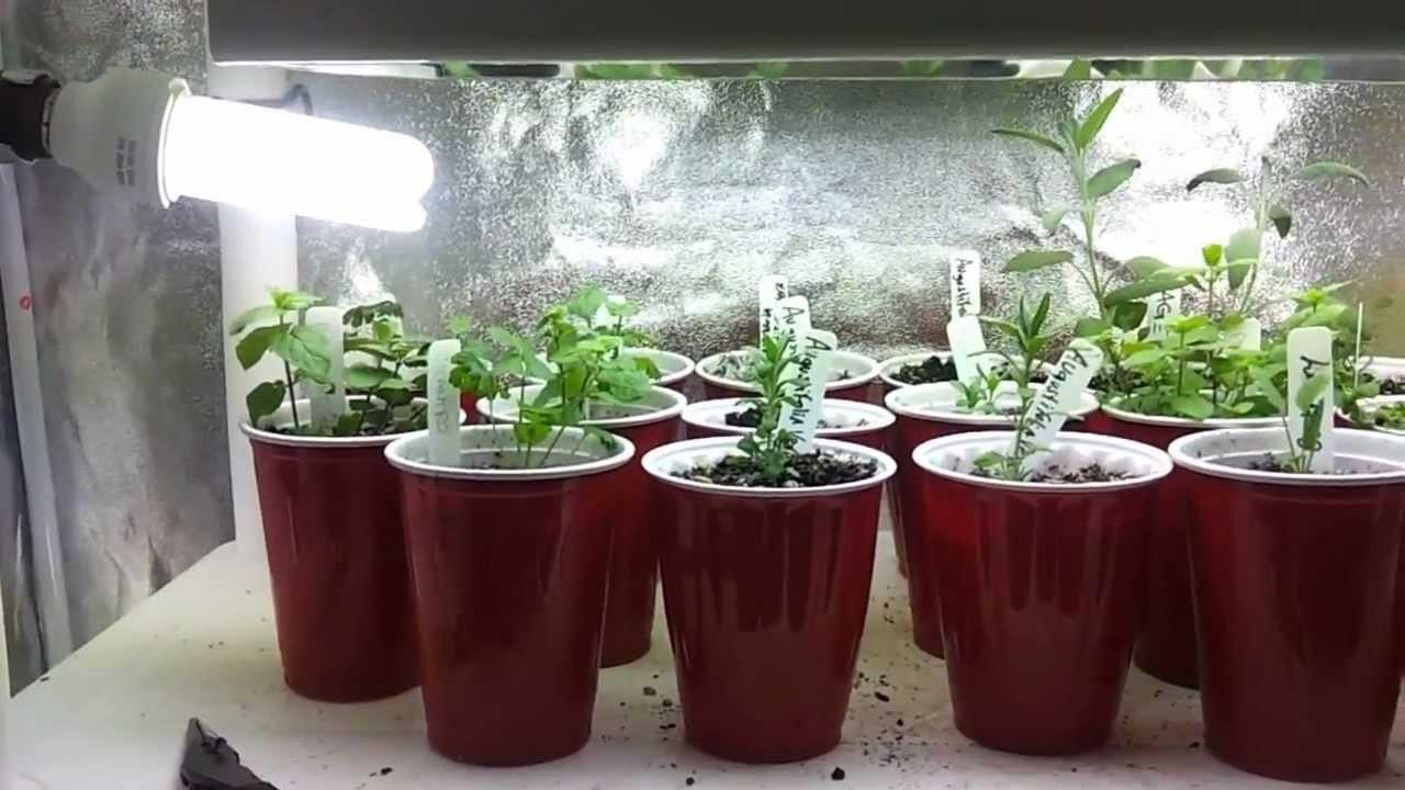 Interesting Led Kitchen Garden Supporting Proper Herb