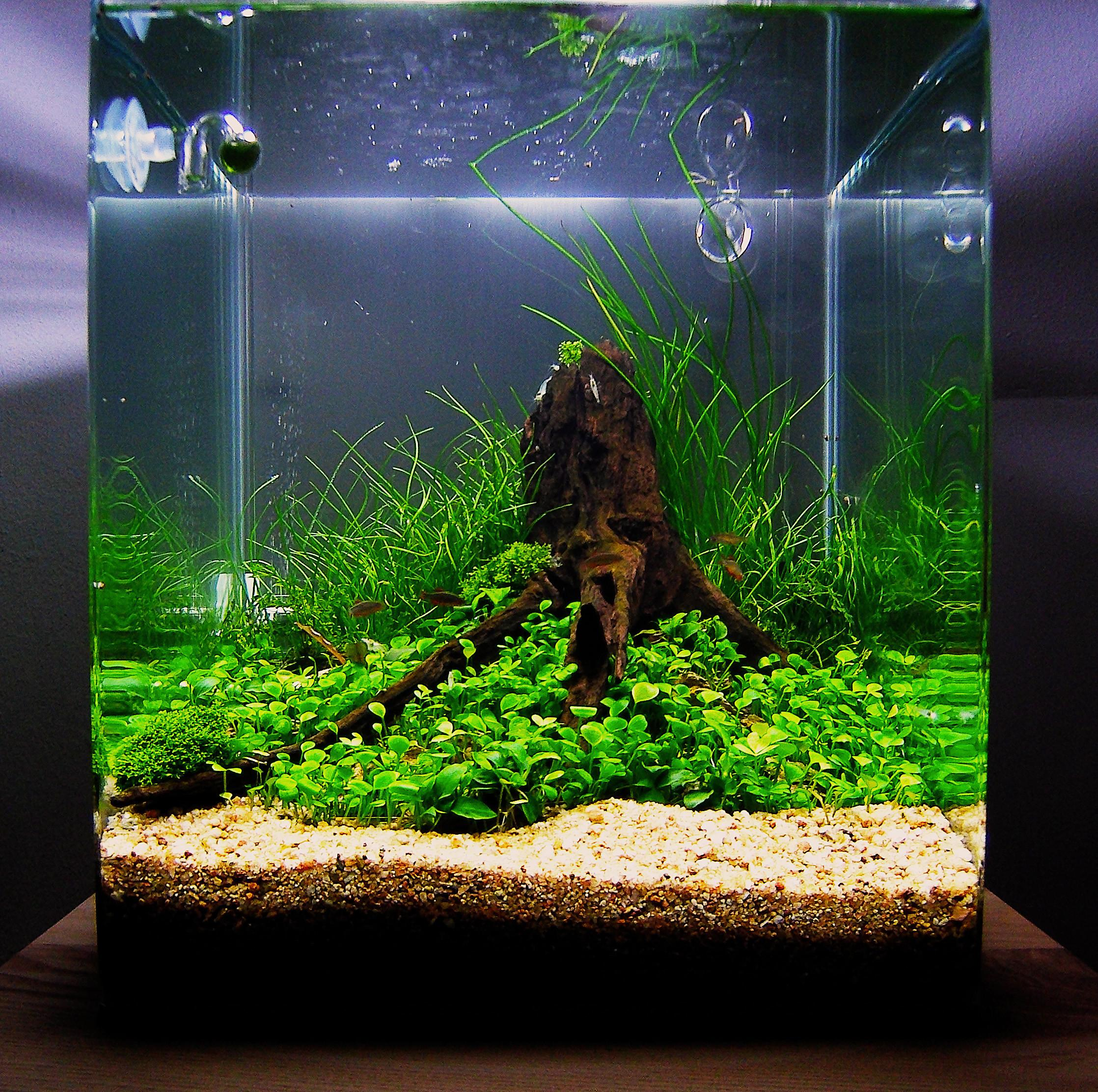 Interior Fish Tank Stand Design Ideas Office