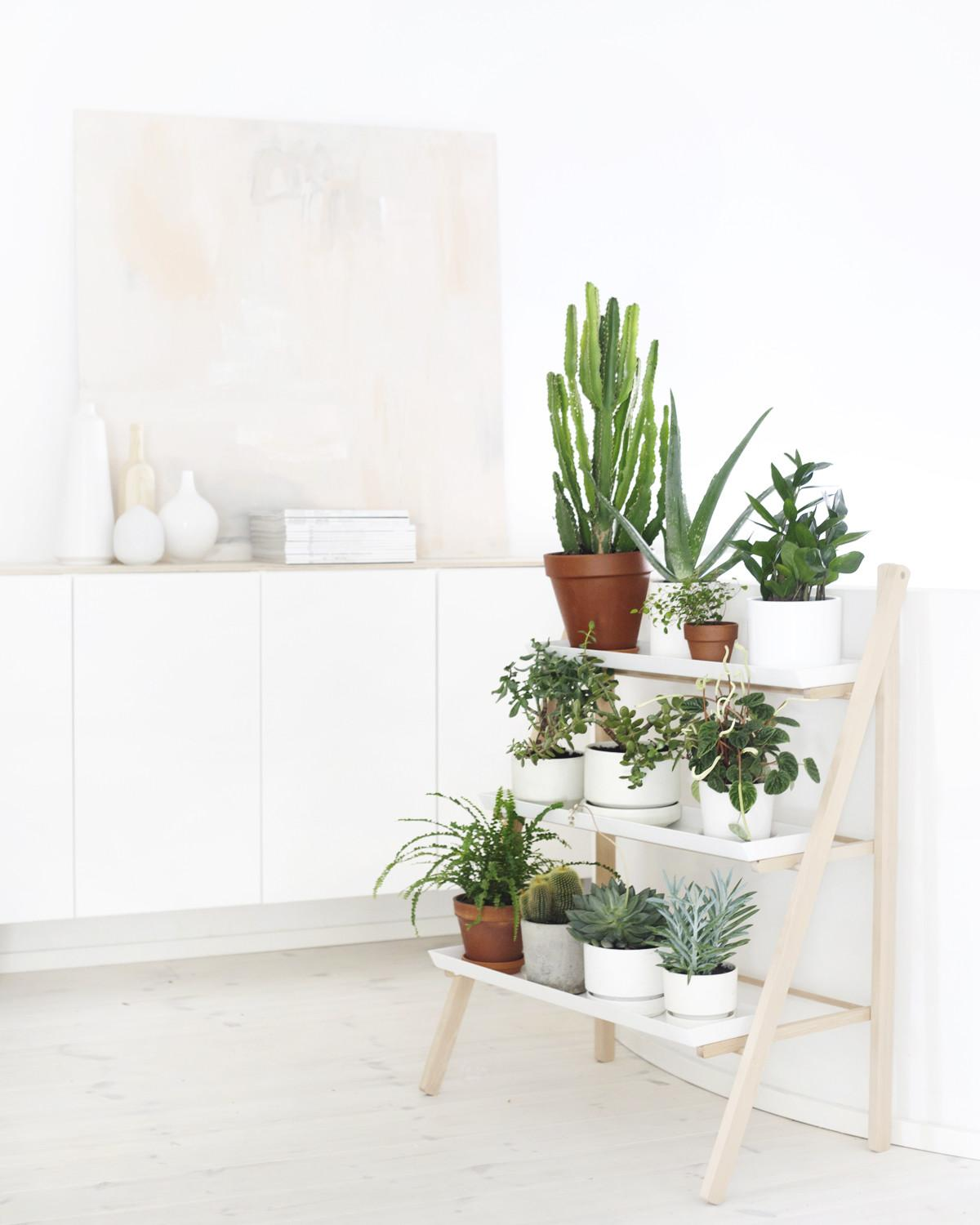 Interior Styling Indoor Plants