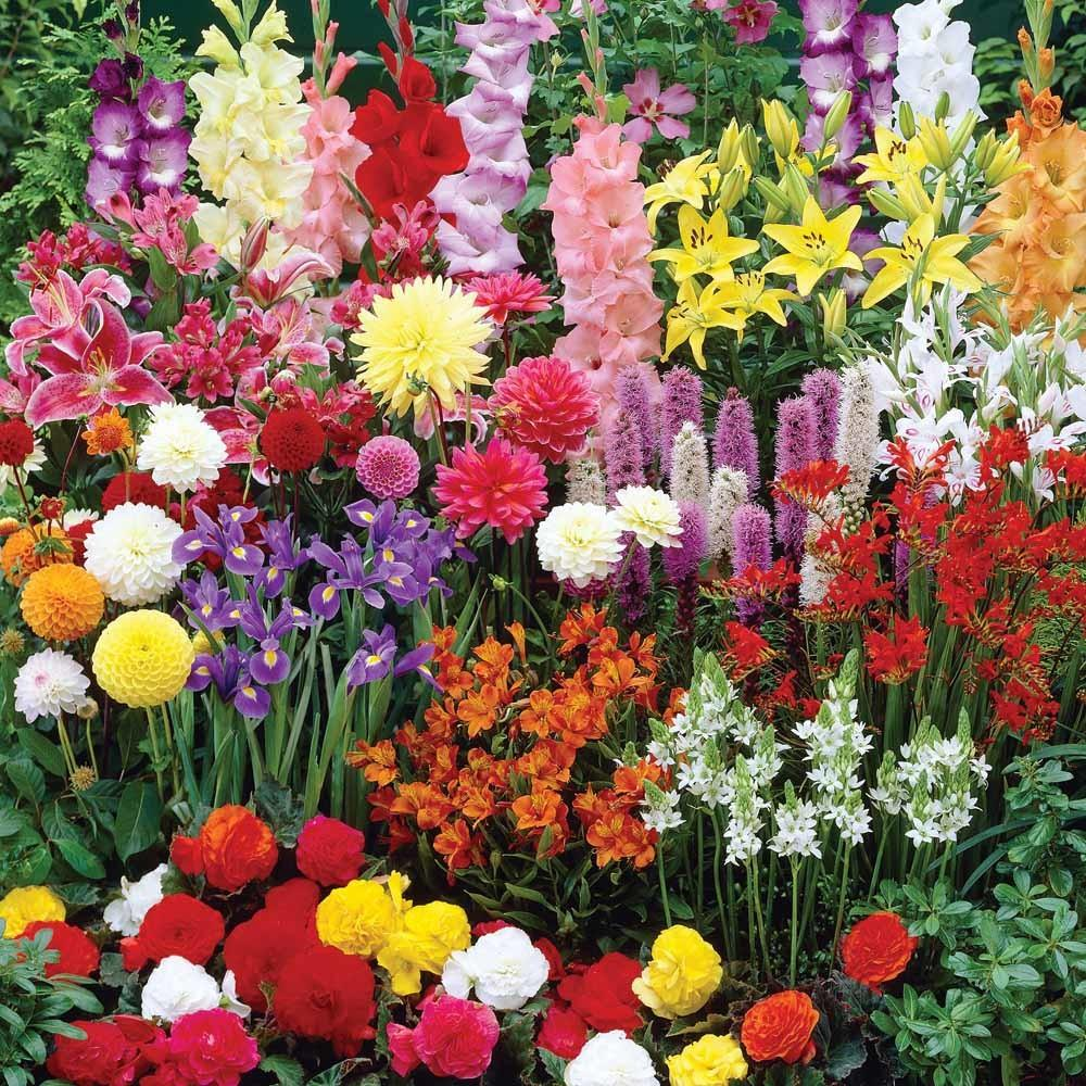 Introduction Bulb Flowers Landscaping Gardening