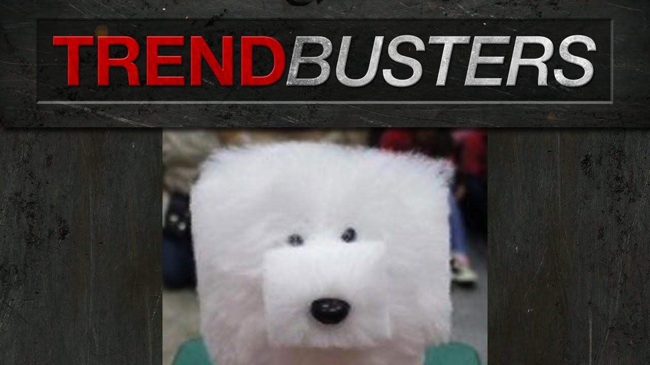 Japanese Cube Dog Grooming Trendbusters