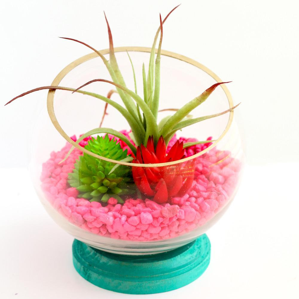 Kailo Chic Life Diy Neon Footed Terrariums