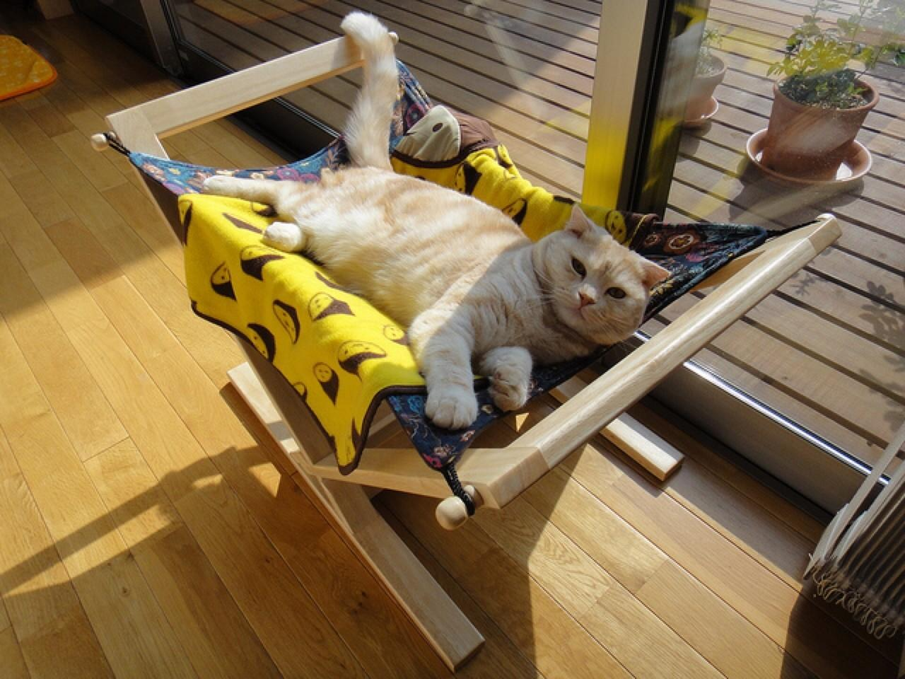 Keep Cats Cool Healthy Paws Pet Insurance