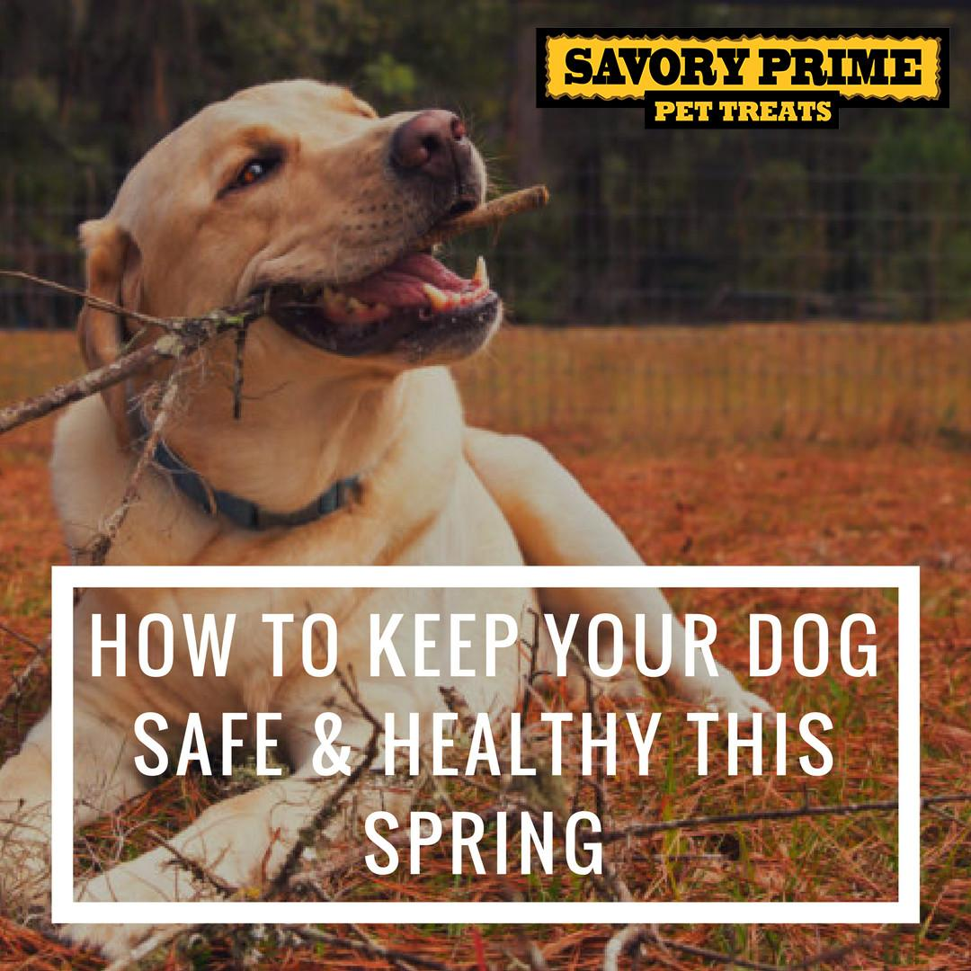 Keep Your Dog Safe Healthy Spring Savory