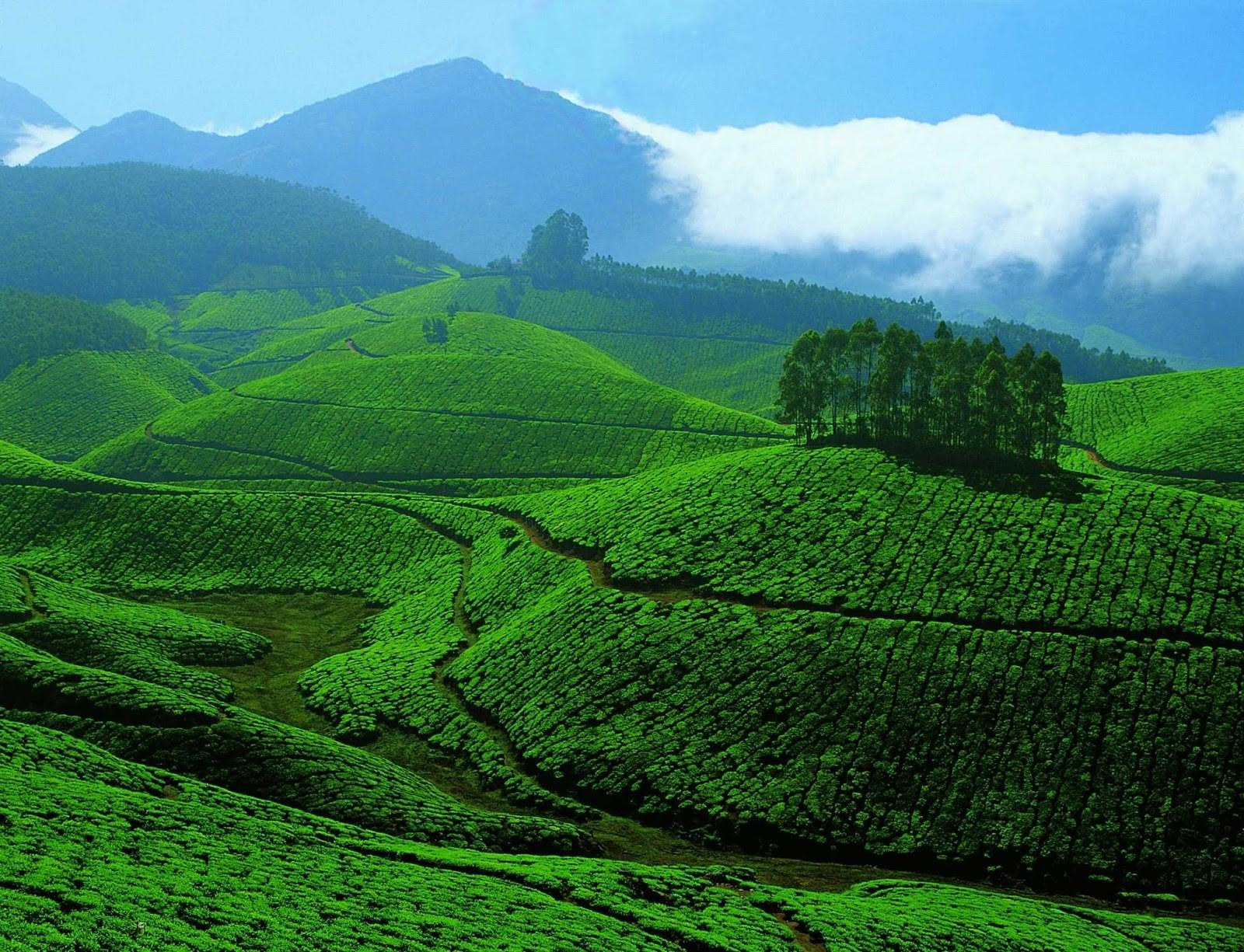 Kerala Tour Packages Holidays Cheapest
