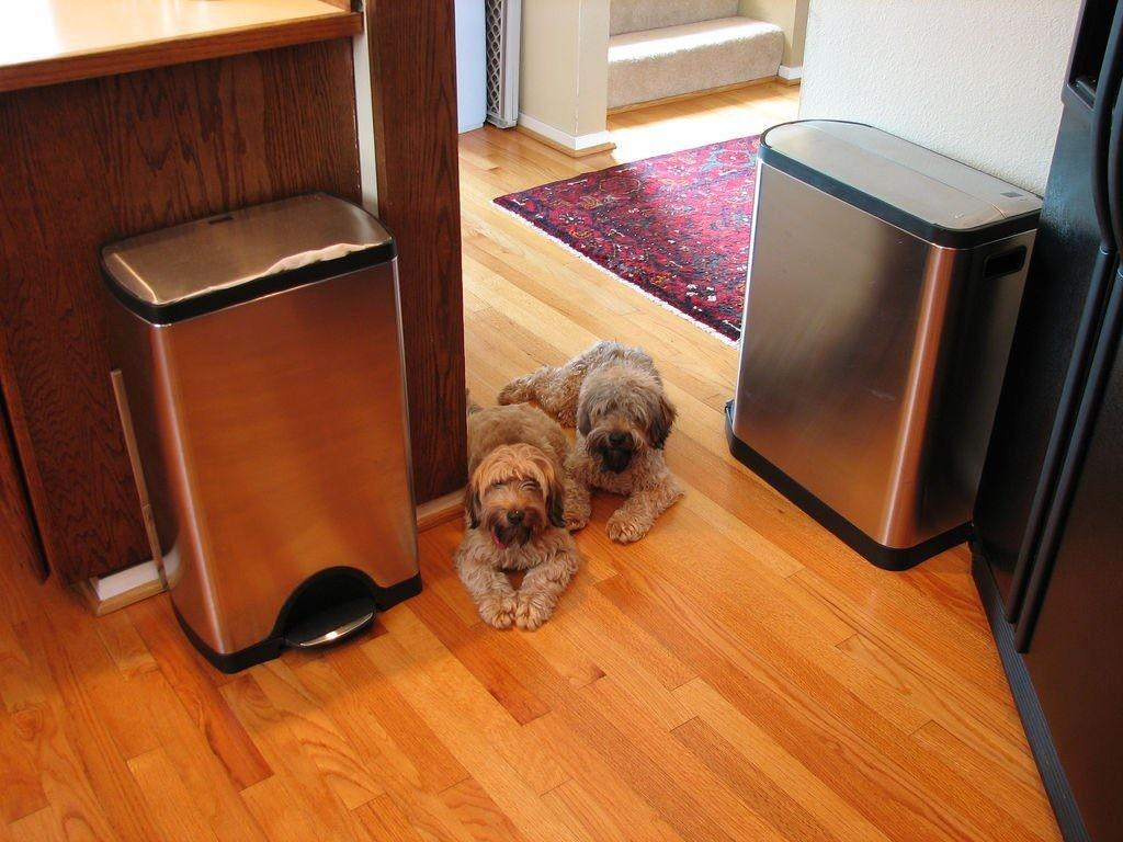 Kitchen Garbage Cans Stainless Steel Stylish