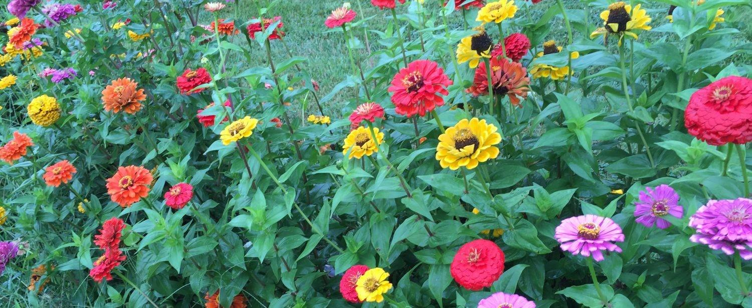 Late Summer Gardening Tips Buying Plants Sale
