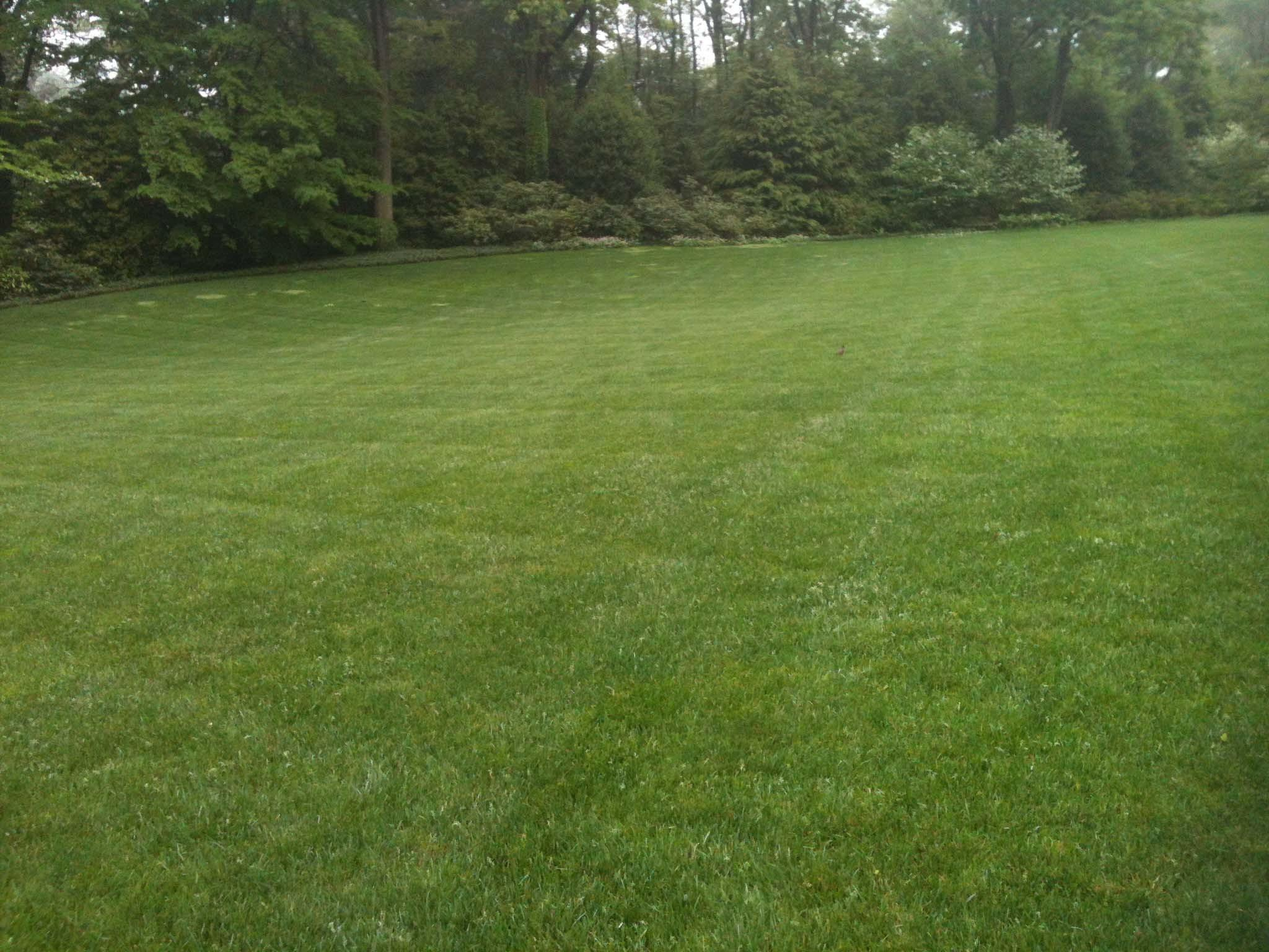 Lawn Care Grass Delaware Valley Turf