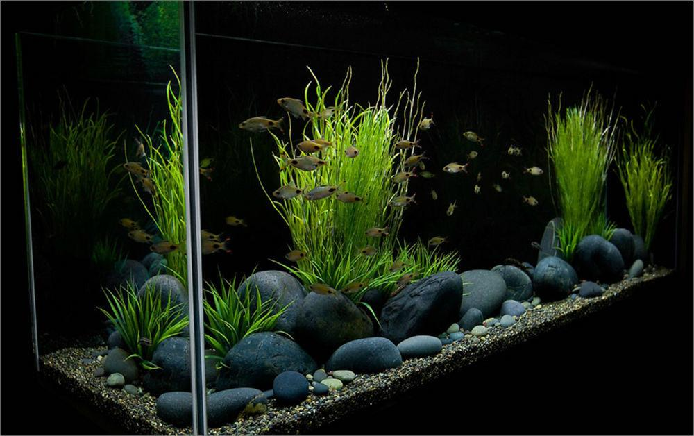 Lbs Black Beach Pebble Aquarium Decor Tank River