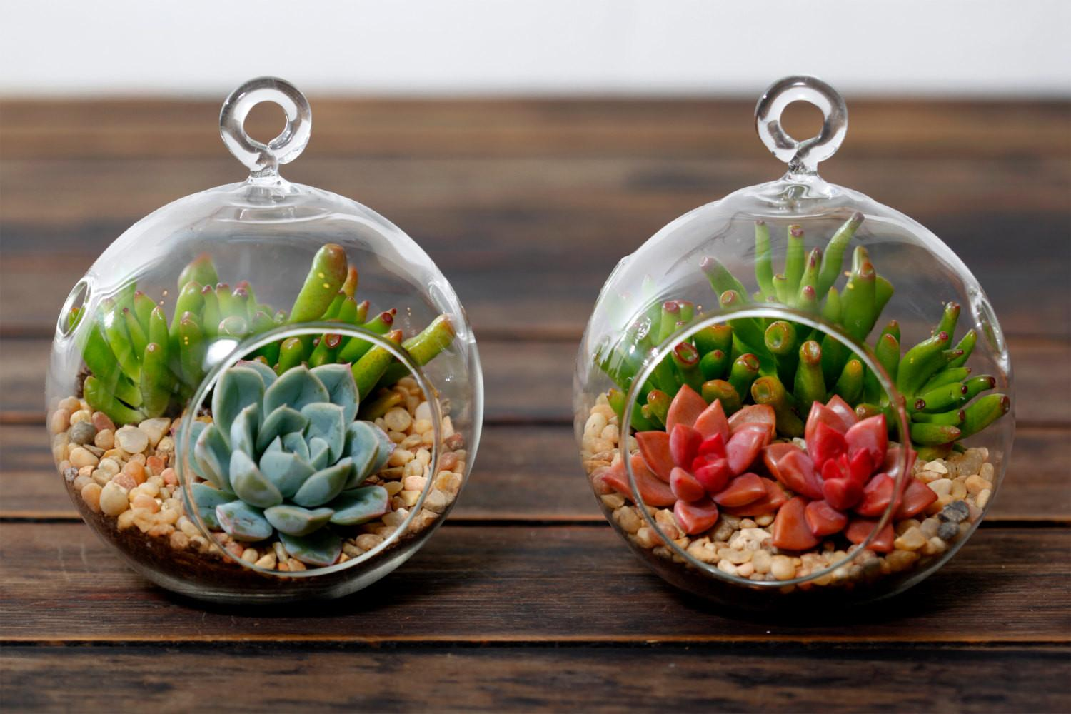 Let Make Diy Terrarium Indoindians