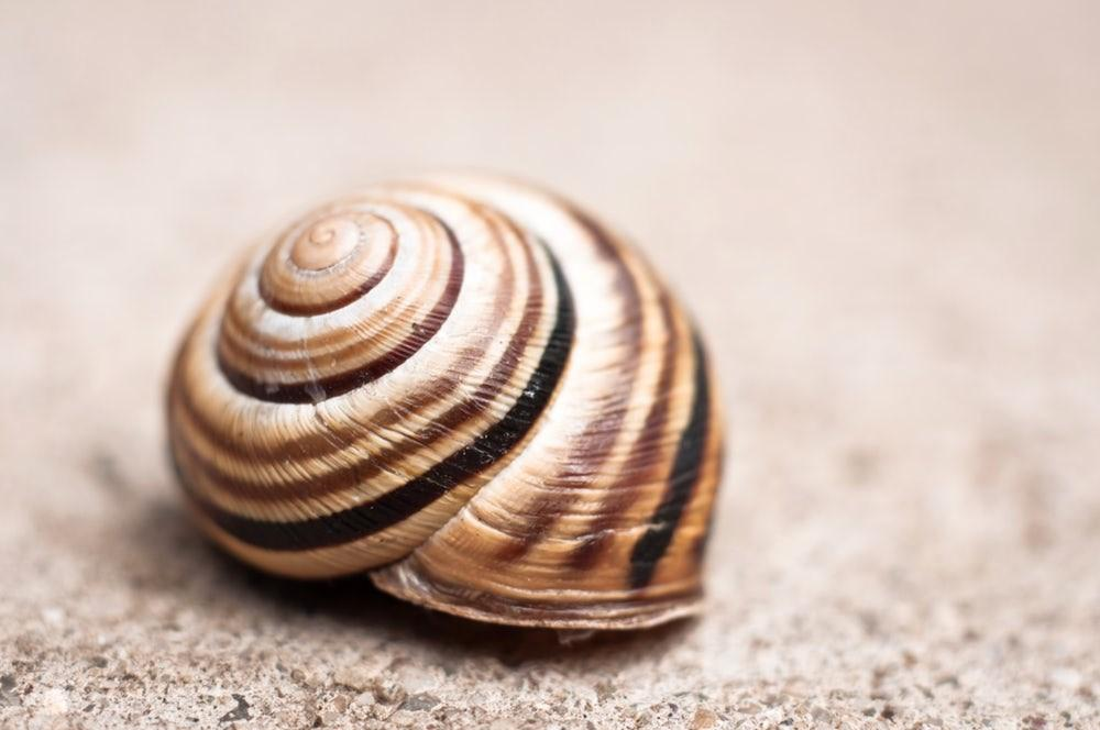 Lithium Ion Batteries Inspired Snail Shells Could Prove