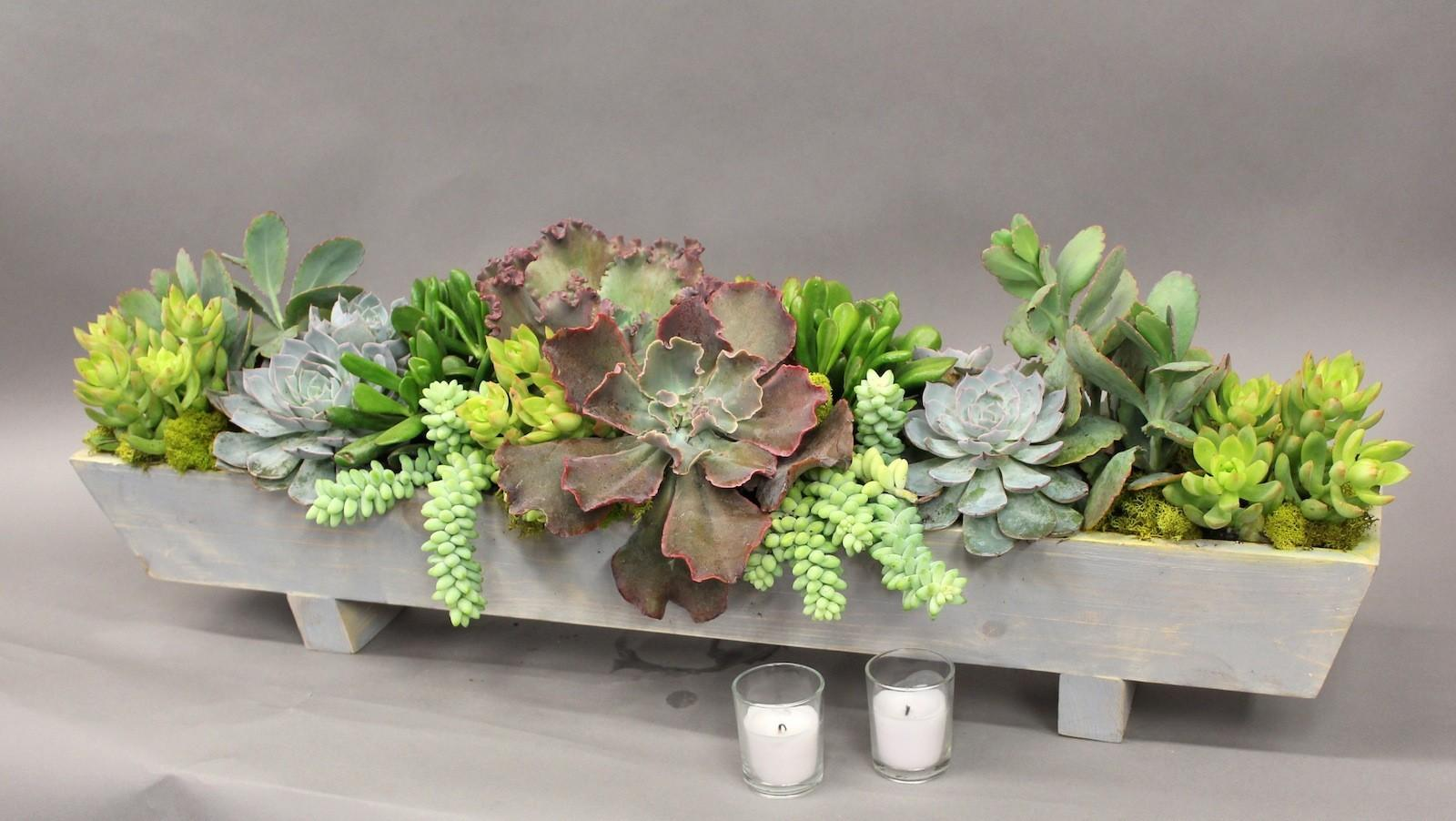 Long Succulent Arrangement
