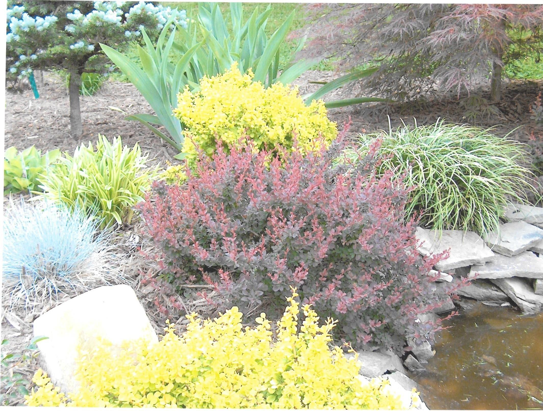 Low Maintenance Perennial Plant Gardens Installations