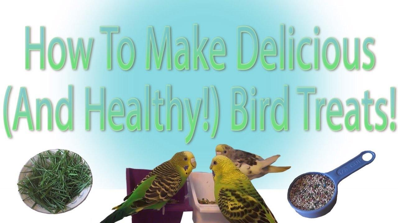 Make Delicious Healthy Bird Treats