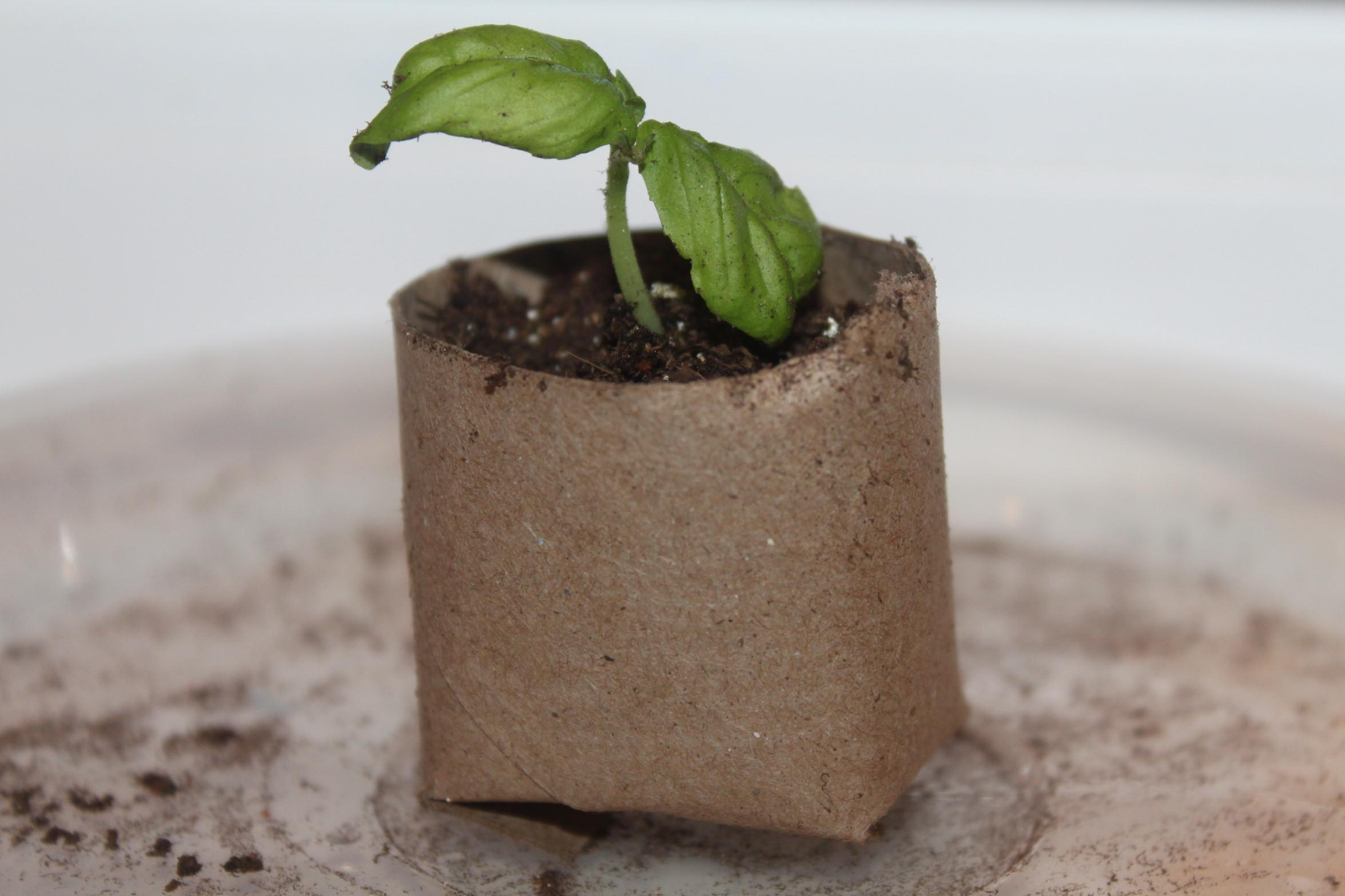Make Homemade Seed Starting Containers