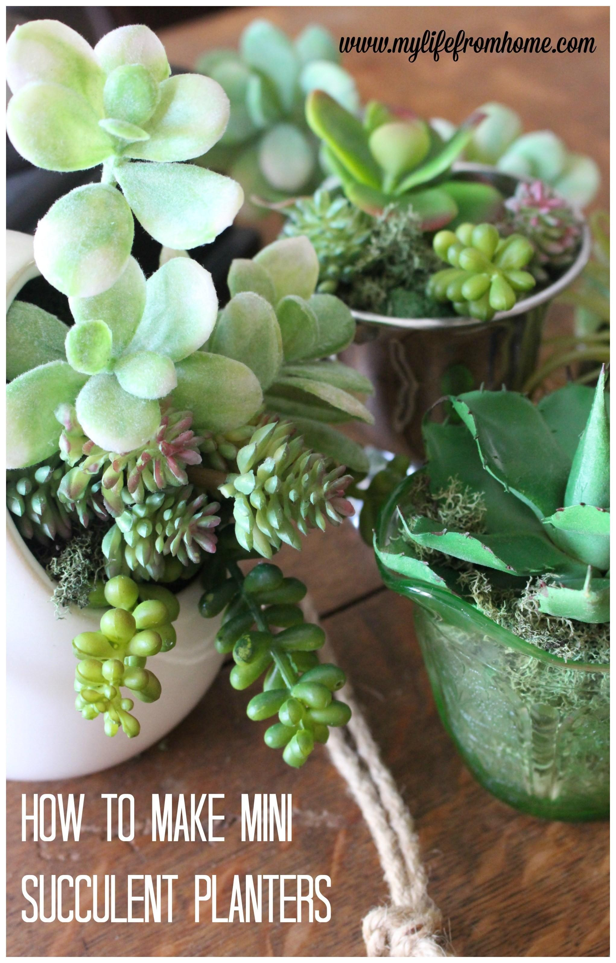 Make Mini Succulent Arrangements Life Home