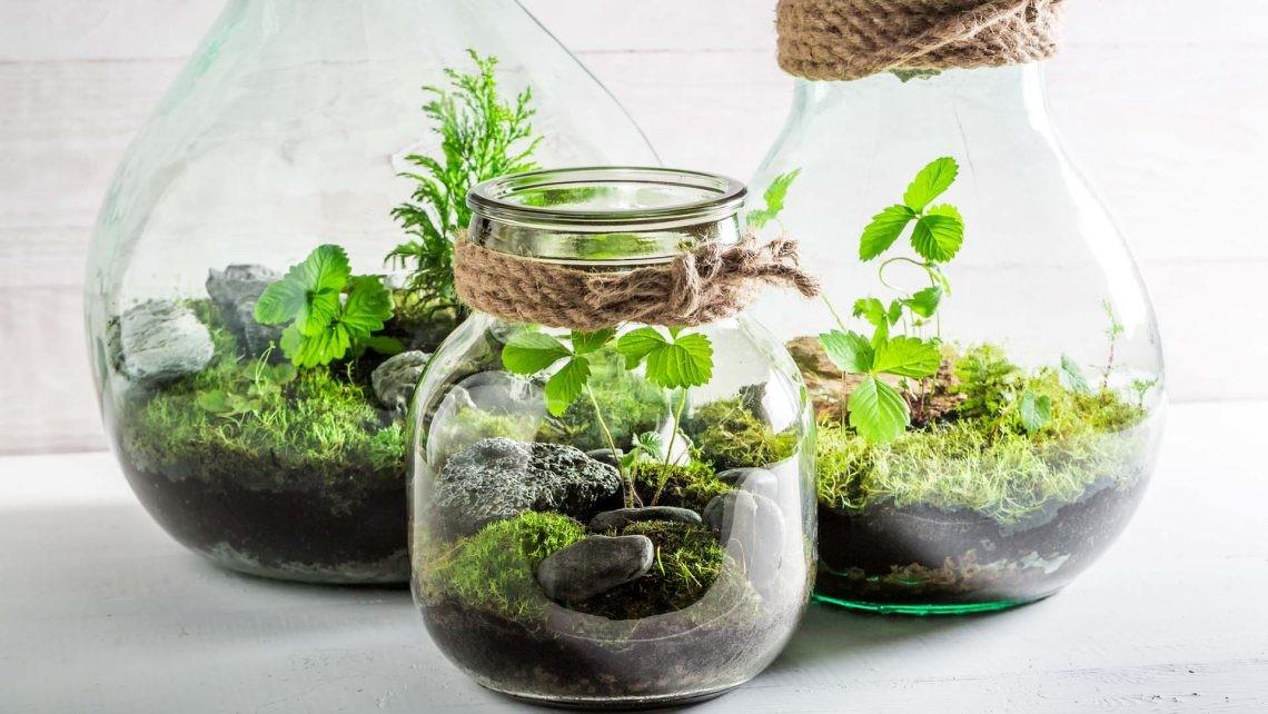 Make Mini Terrariums Live Better