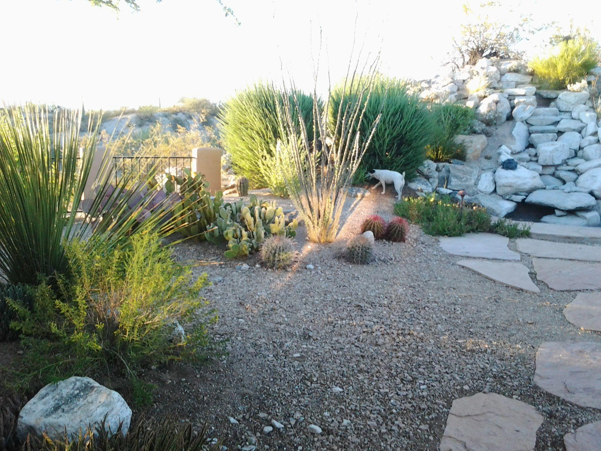 Make Simple Fresh Modern Drought Tolerant Landscaping
