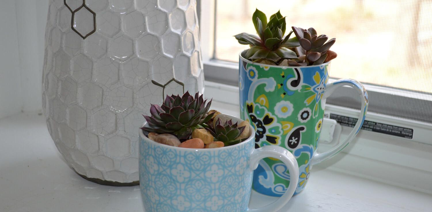 Make Succulent Planters Out Chipped Teacups