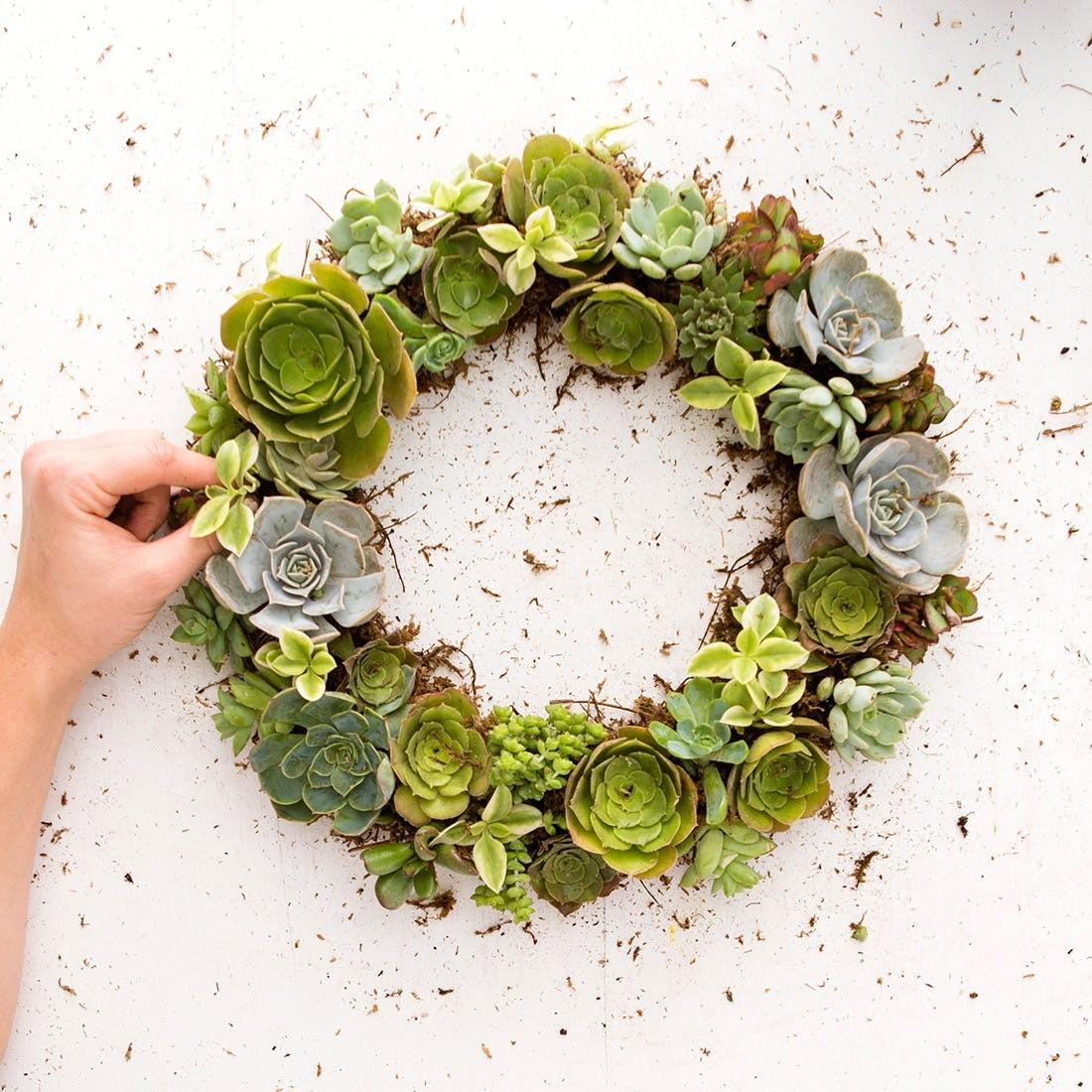 Make Succulent Wreath Can Hang All Year Round
