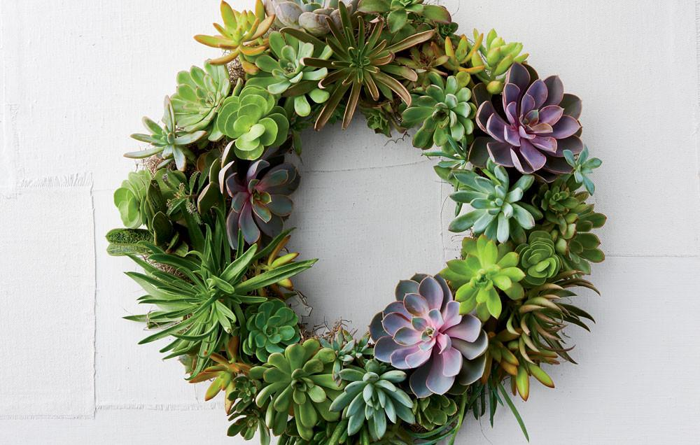 Make Succulent Wreath Rodale Organic Life