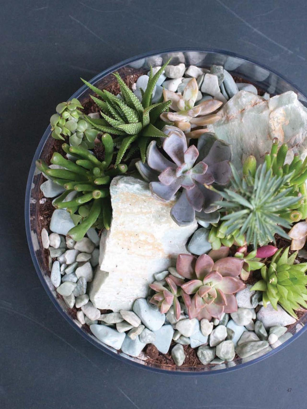 Make Tabletop Succulent Terrarium Diy Network