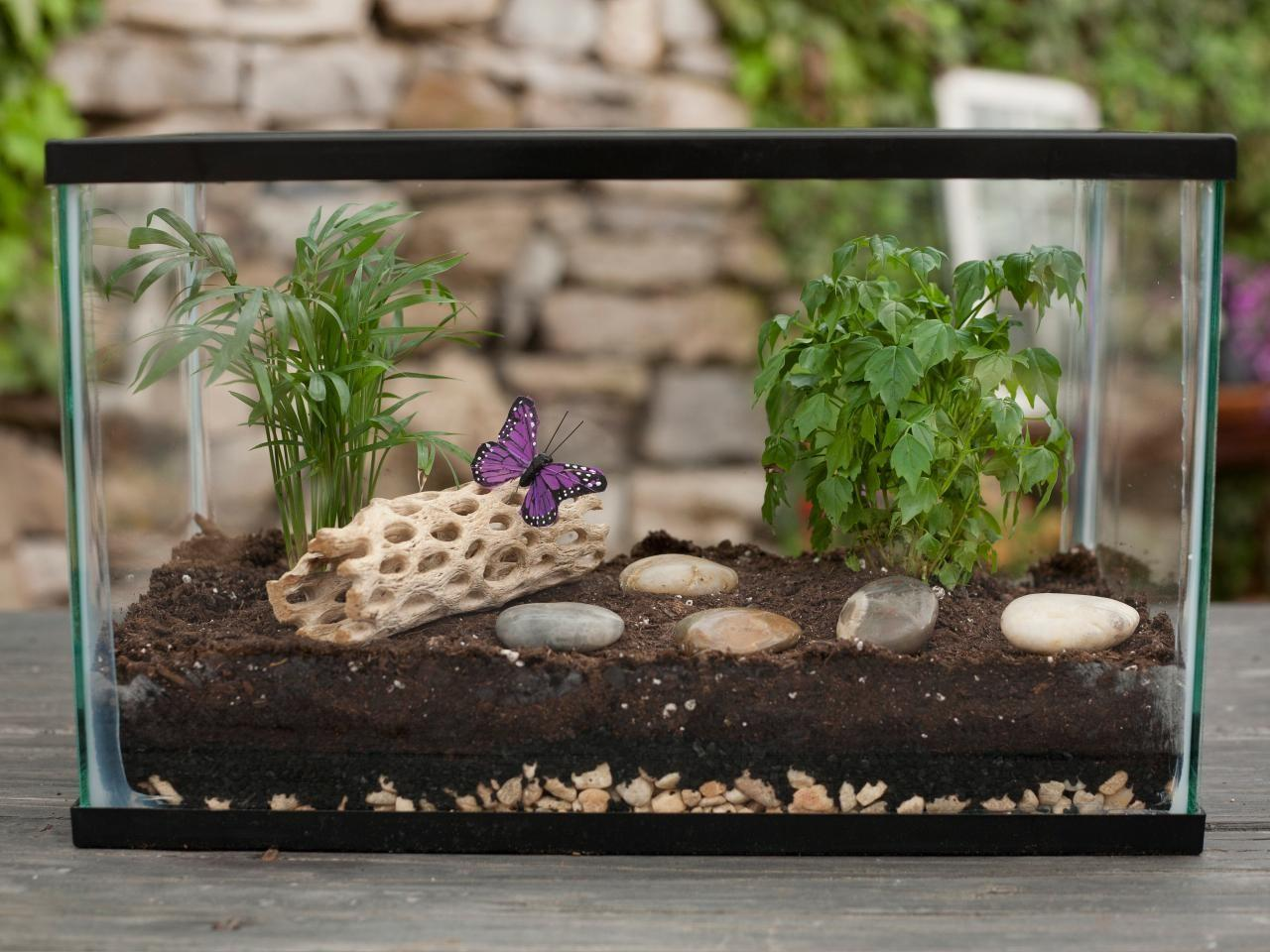 Make Terrarium Tos Diy