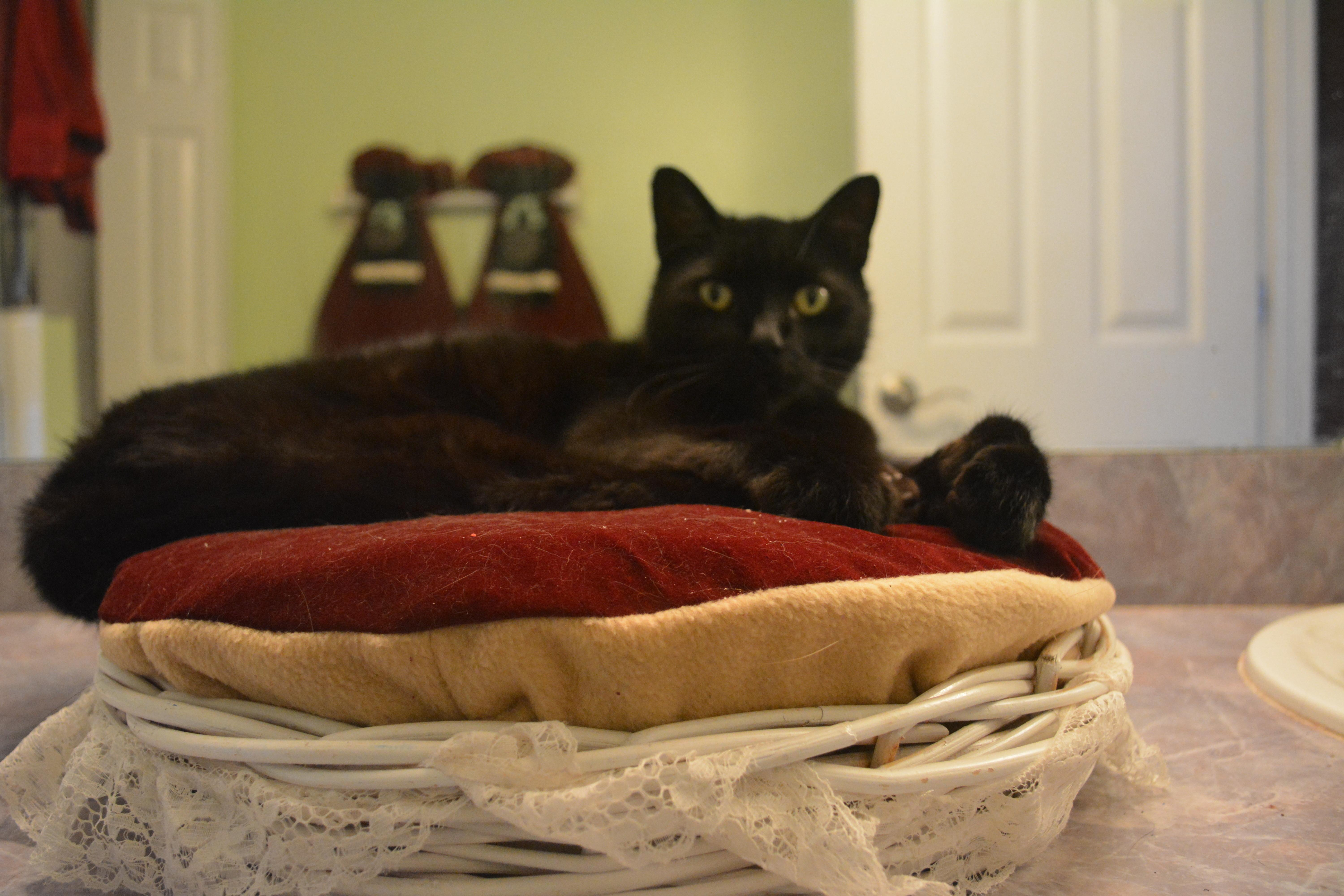 Make Your Own Pet Bed Recycled Pillow