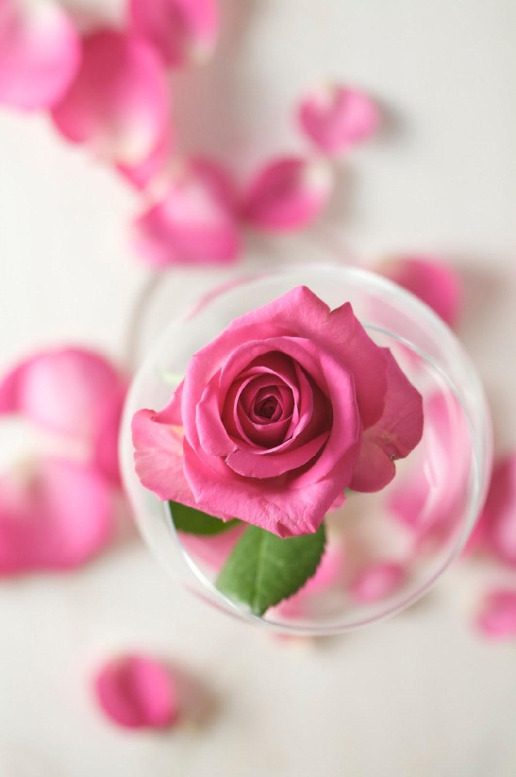 Make Your Own Rose Water Refresh Skin
