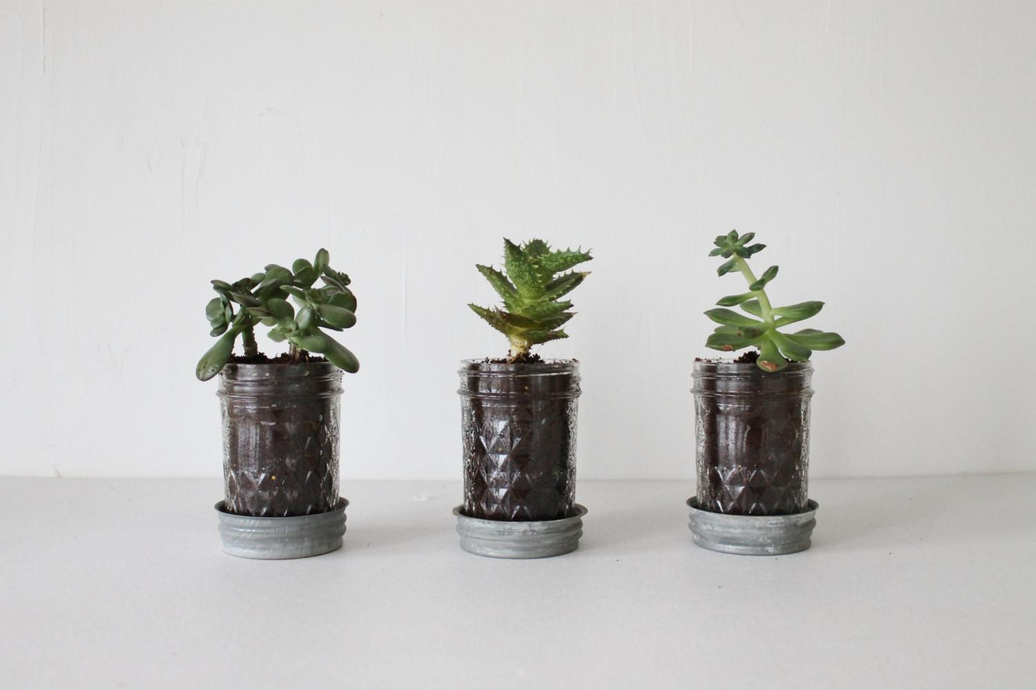 Mason Jar Planters Drainage Set Upcycled Jelly