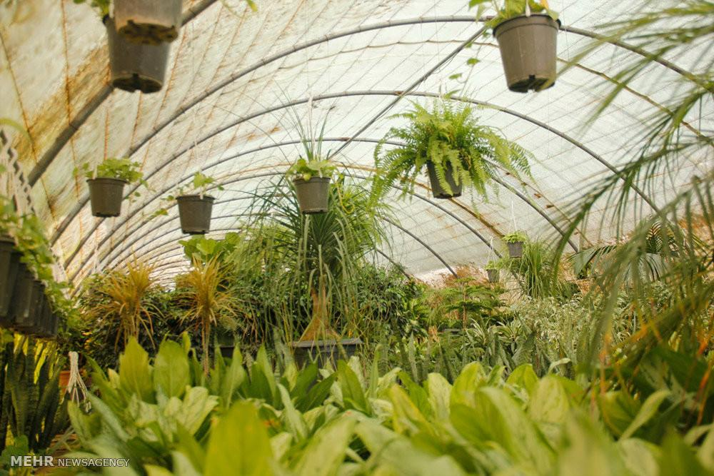Mehr News Agency Beautiful Greenhouses Spring