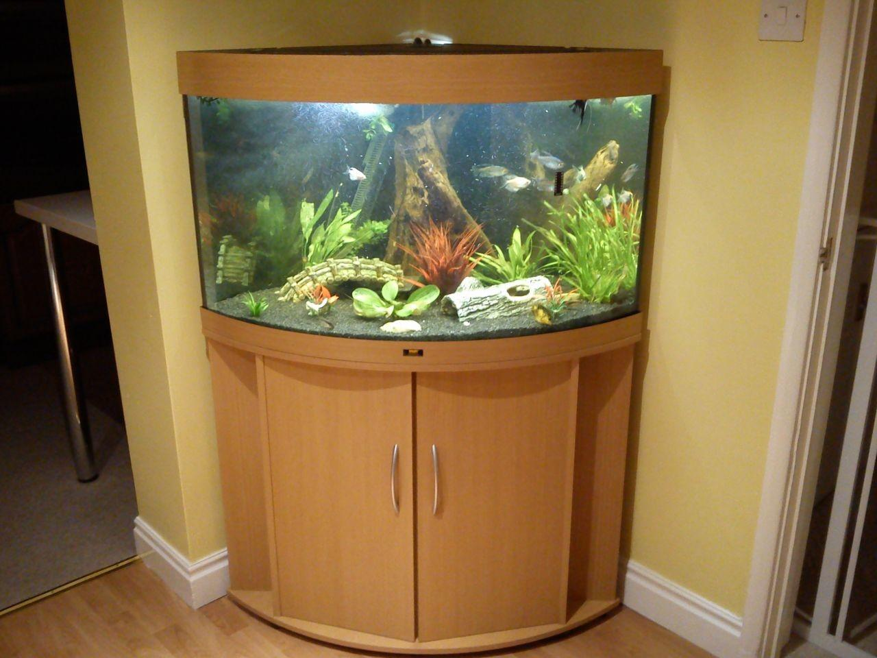 Minimalist Elegant Corner Aquarium Fish Tanks Ideas Yustusa