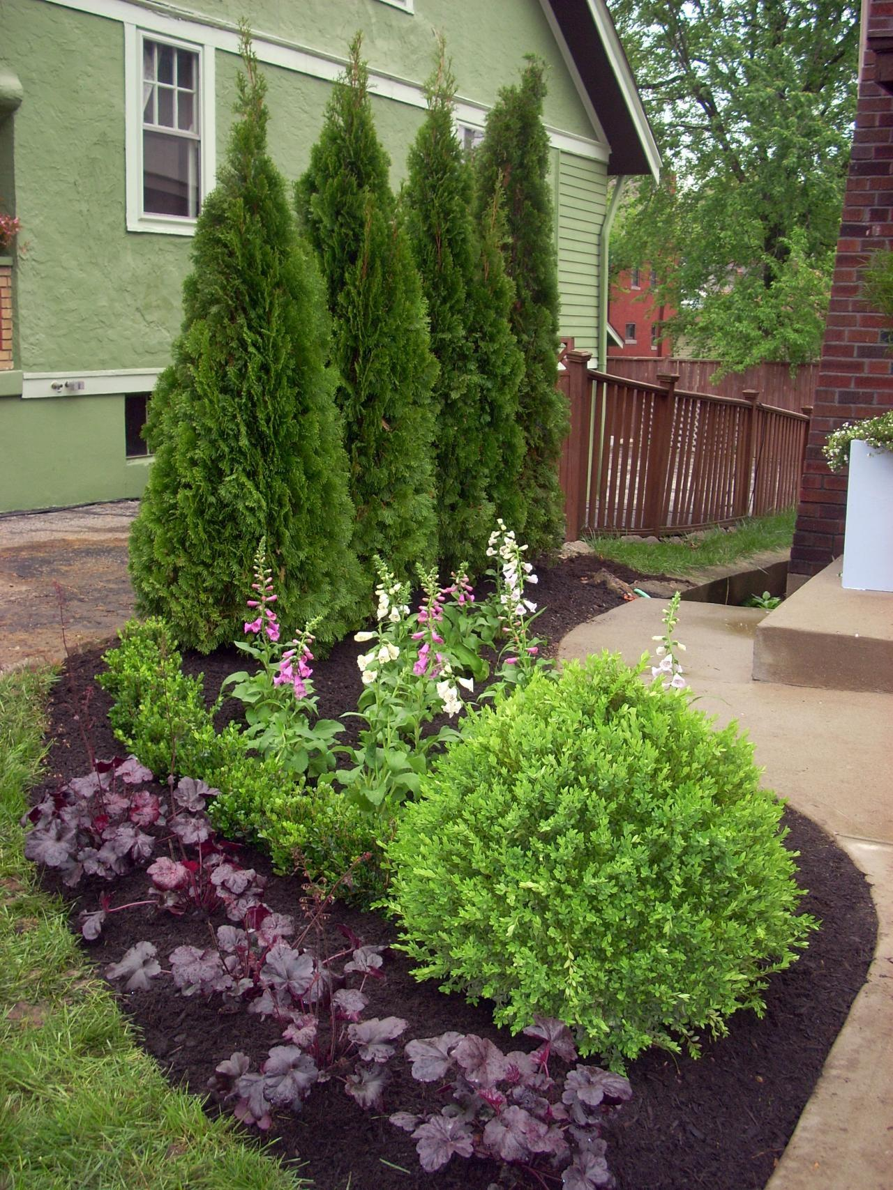 Mixed Screen Plants Layering Evergreens Flowering
