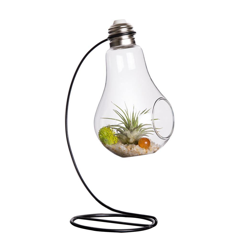 Mkono Air Plant Terrarium Airplants Glass Vase Succulent