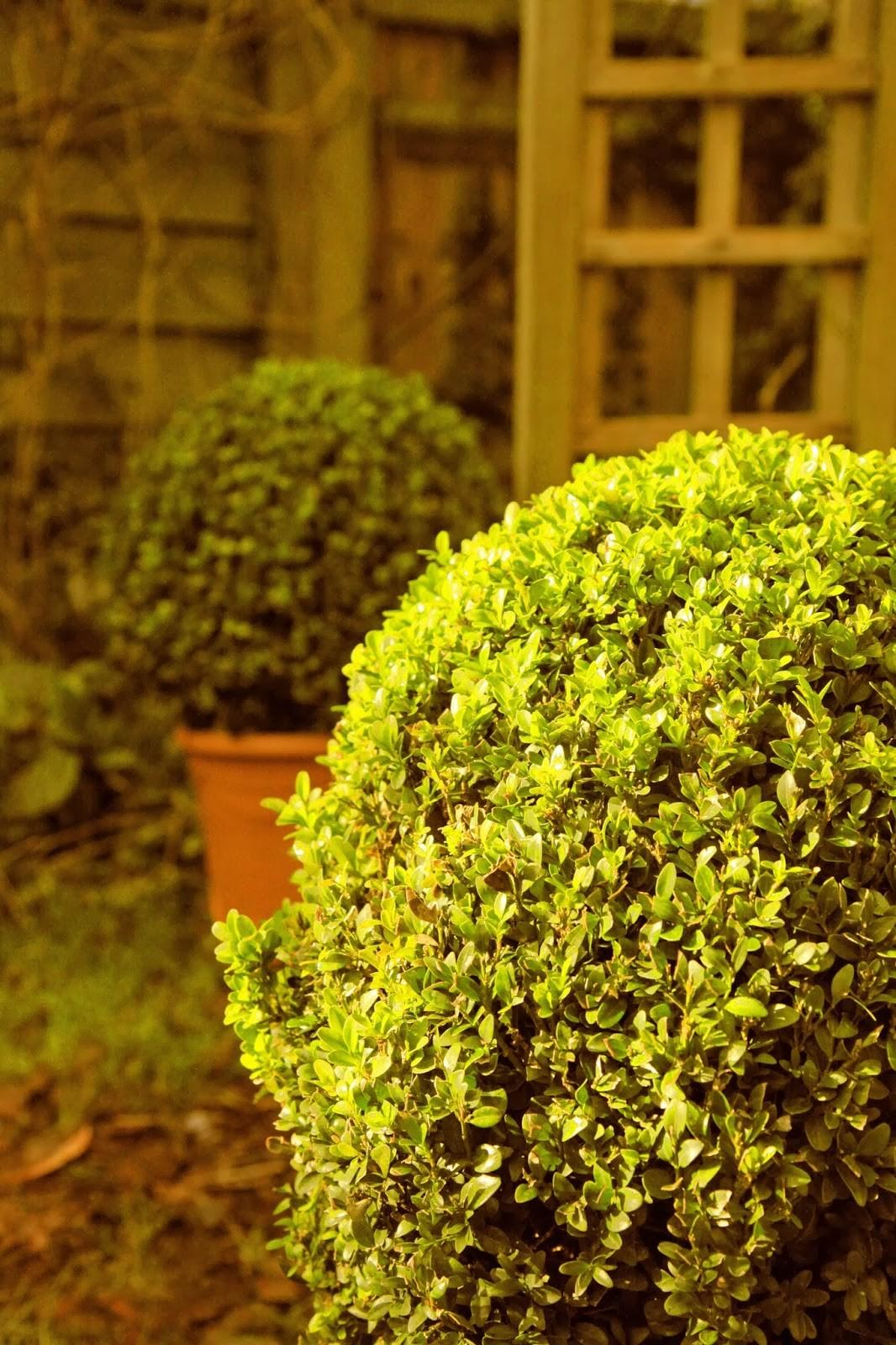 Modern Country Style Topiary