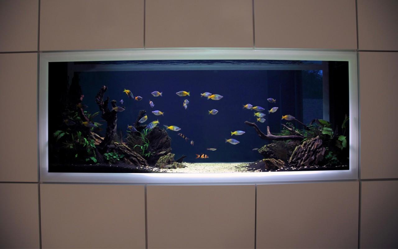 Modern Fish Tank London Vitro House Aquarium