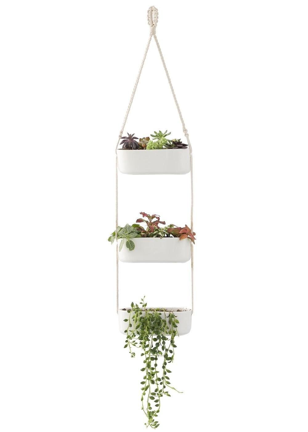 Modern Planters Hang Your Plants Ceiling