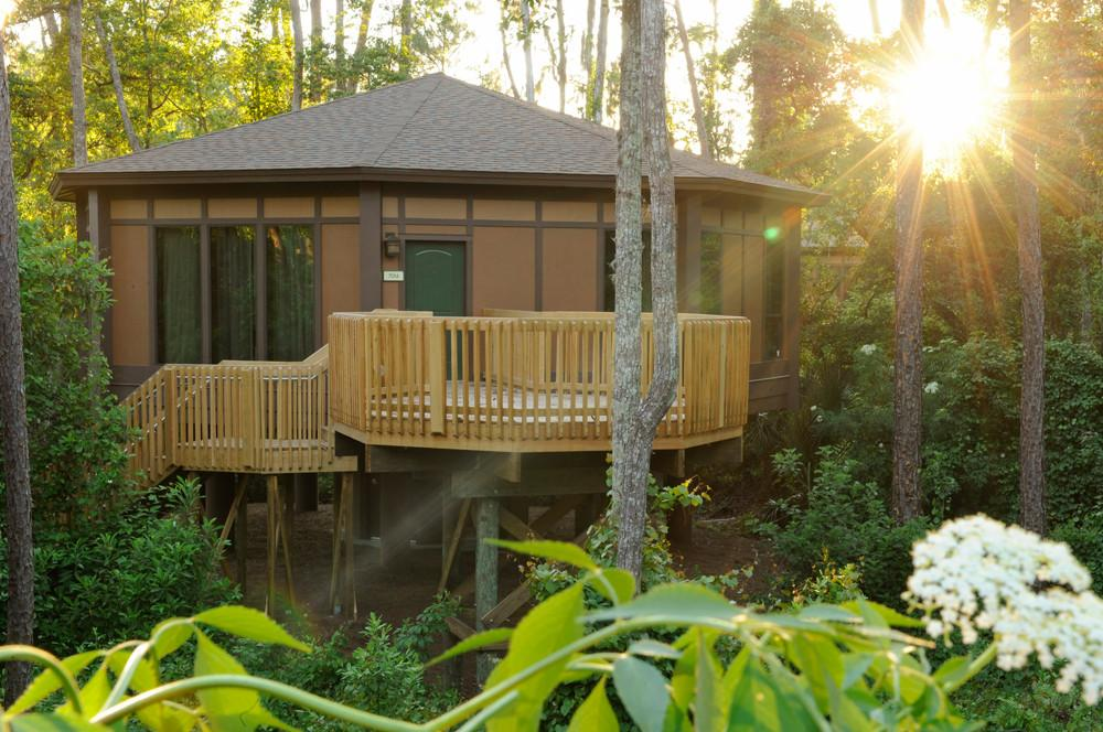 Modern Treehouses Childhood Dream Turned Into Luxury