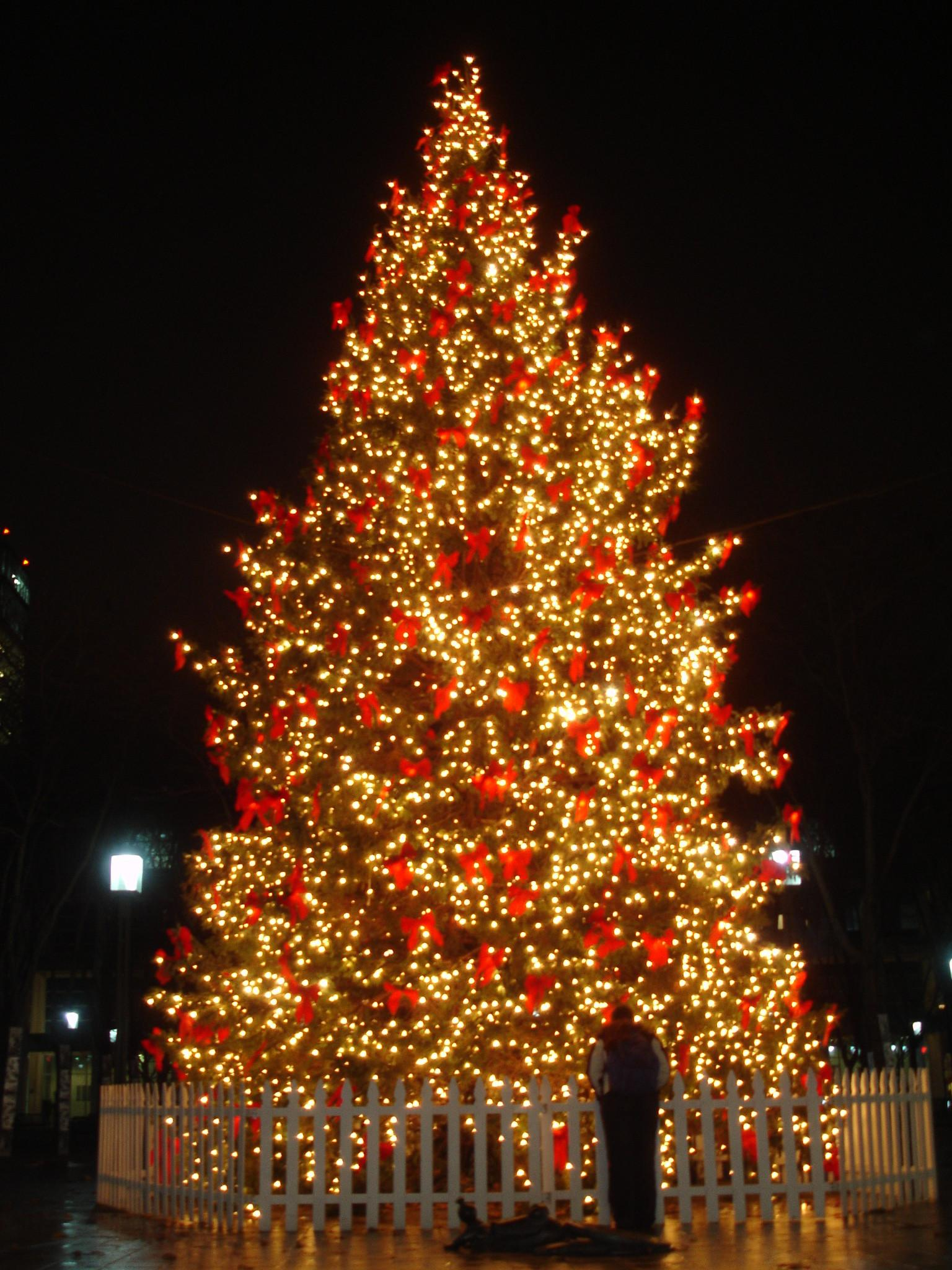 Most Beautiful Christmas Trees Happy Holidays