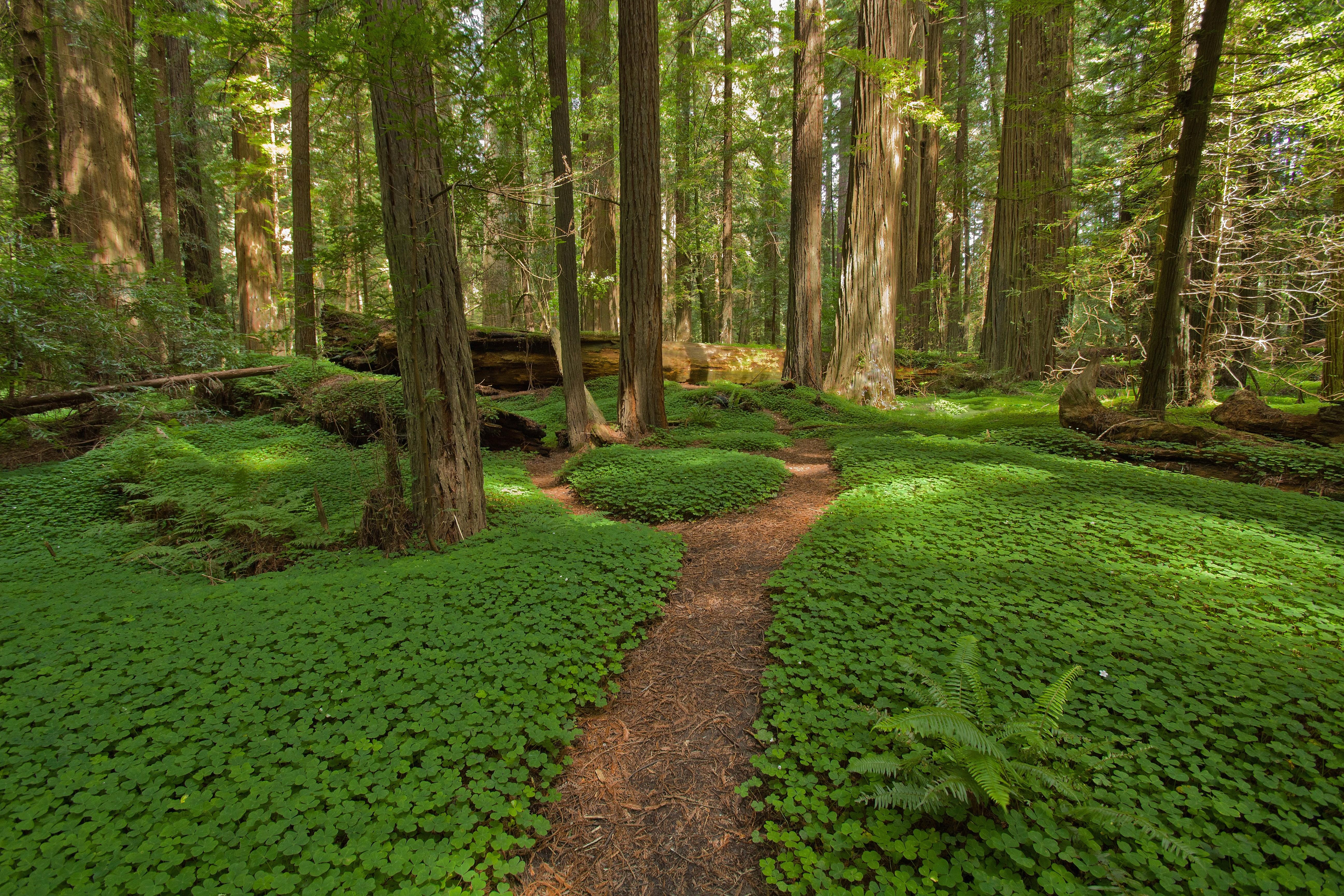 Most Beautiful Forests World Huffpost