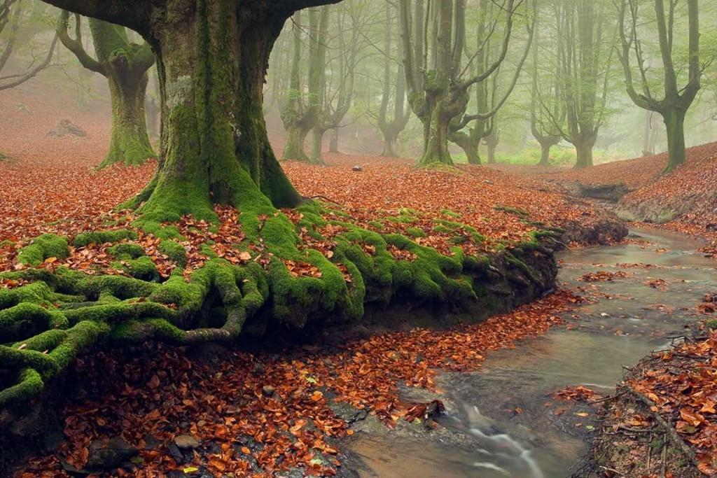 Most Mysterious Forests World Tentree