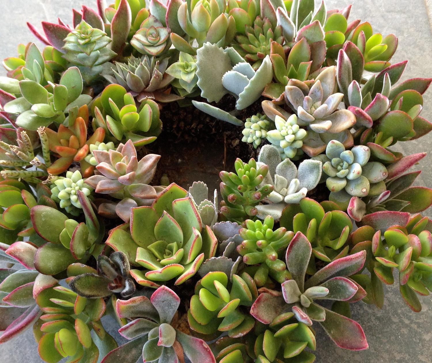Mother Day Living Succulent Centerpiece Hanging
