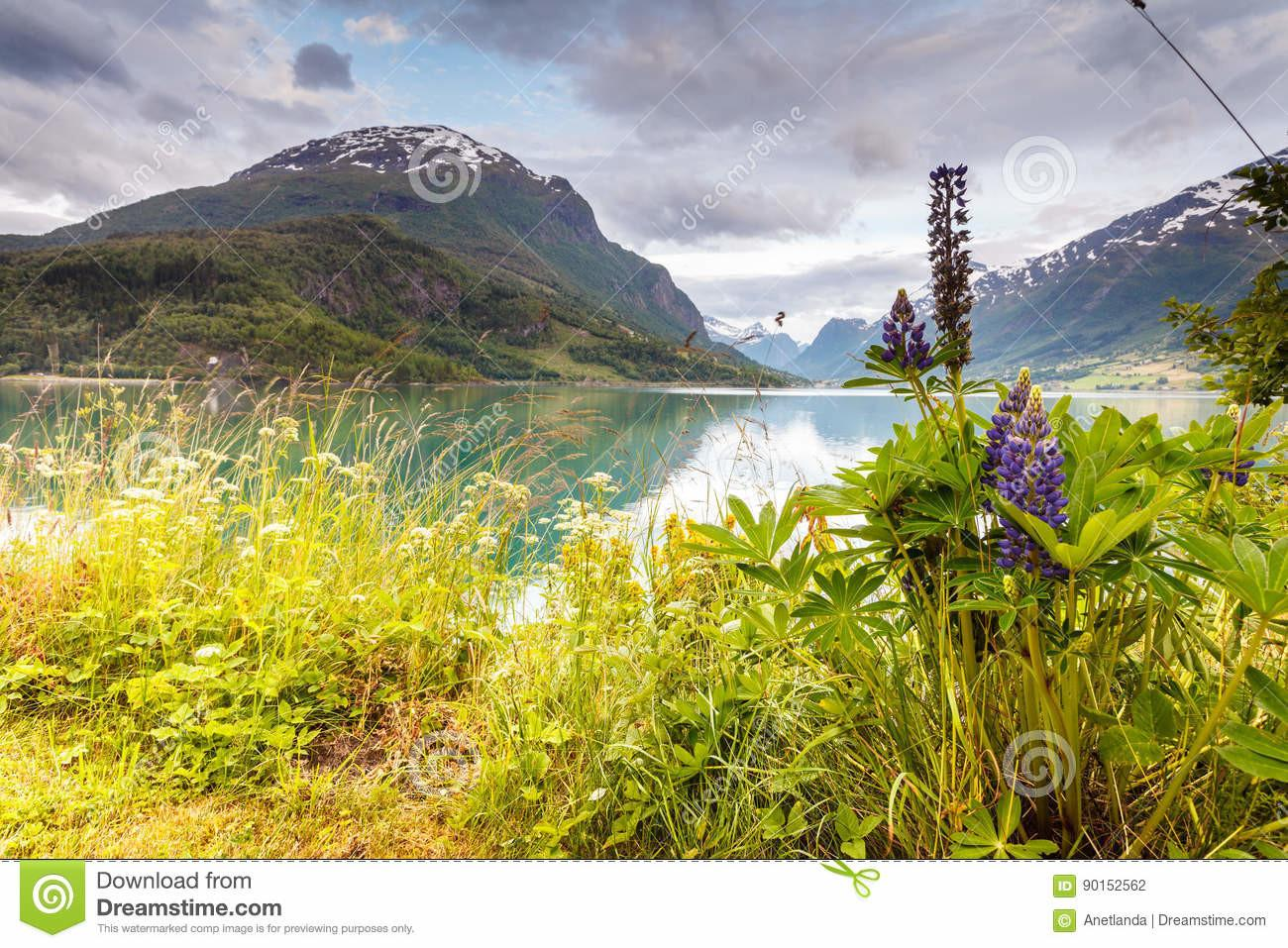 Mountains Landscape Fjord Norway Stock