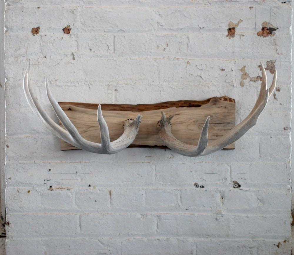 Naturally Shed Deer Antler Wall Mount Coat Rack Jewelry