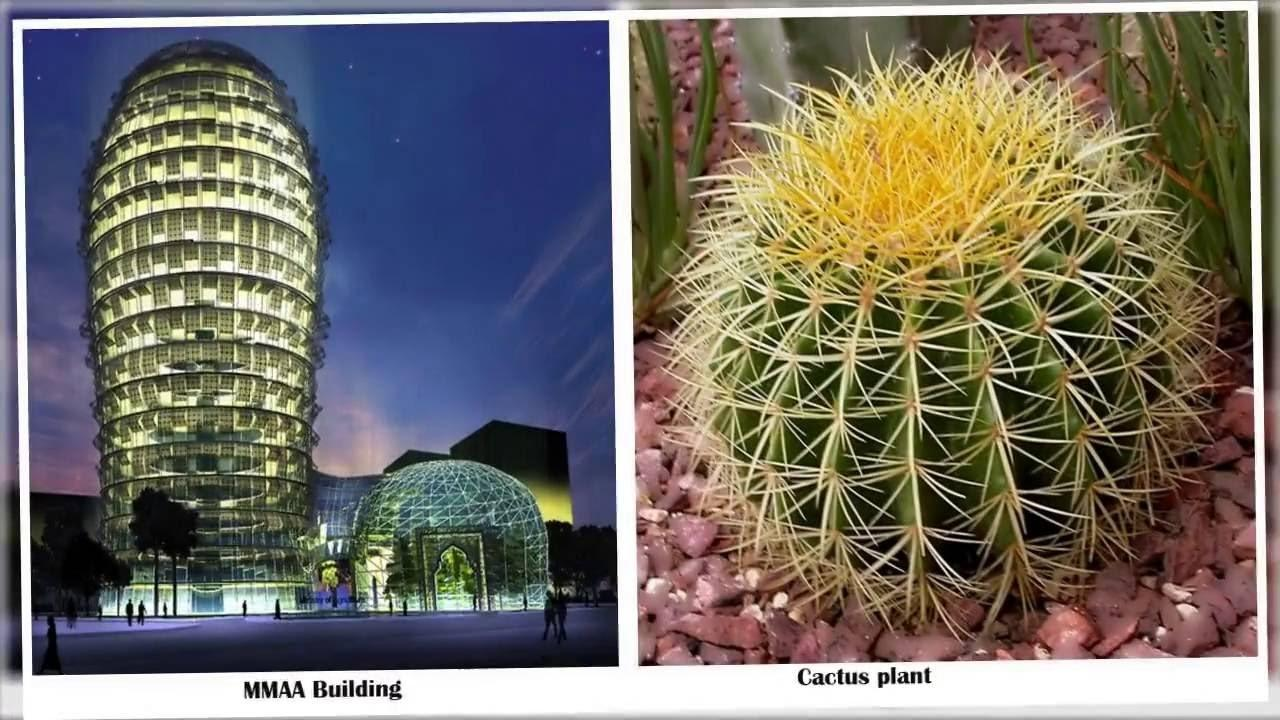 Nature Inspired Architectural Designs