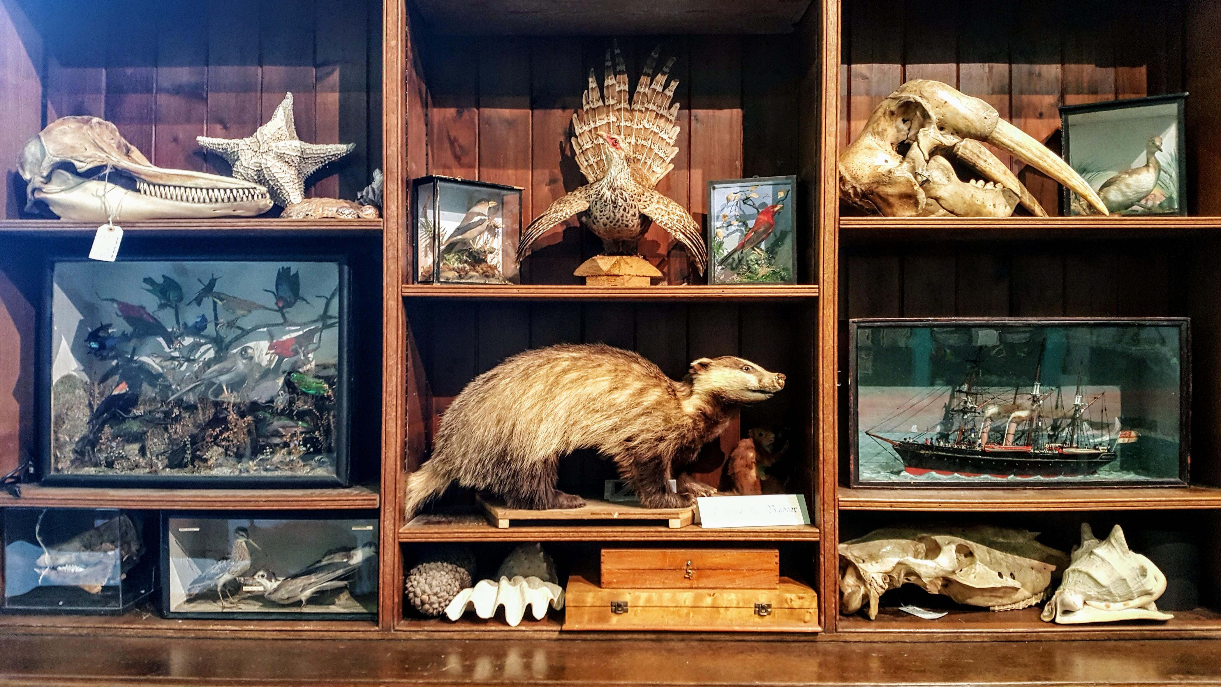 Need Your Help Choose Objects Our Cabinet